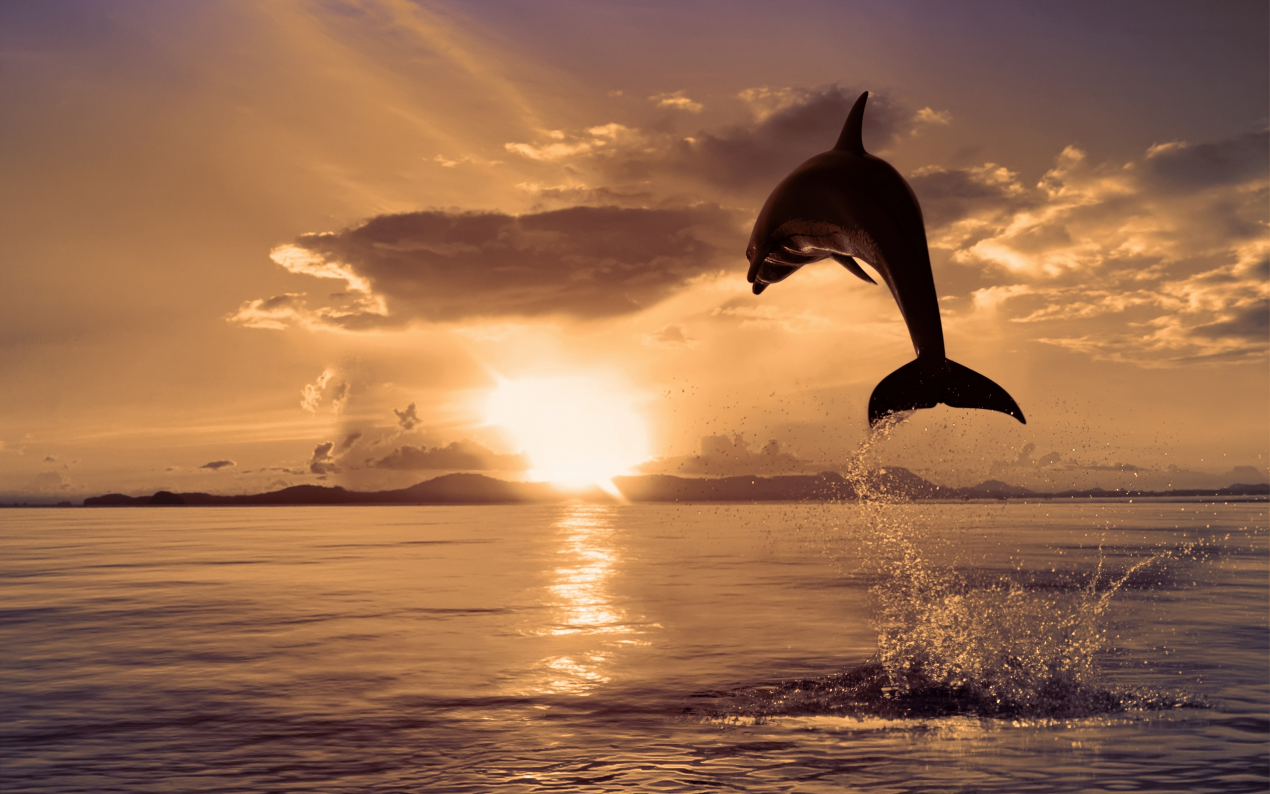 Дельфин прыжок волна загрузить