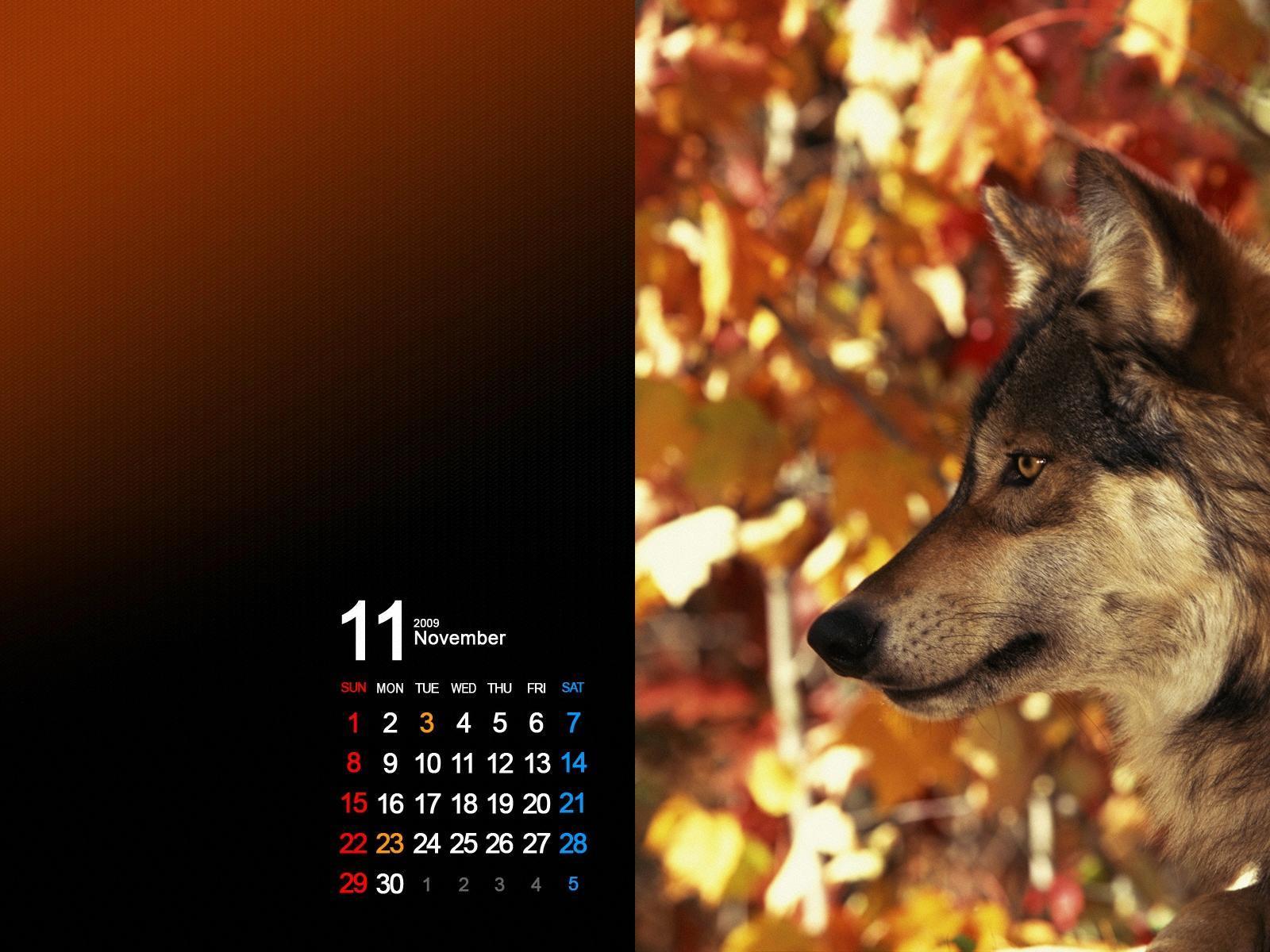 Фото на календарь с волками