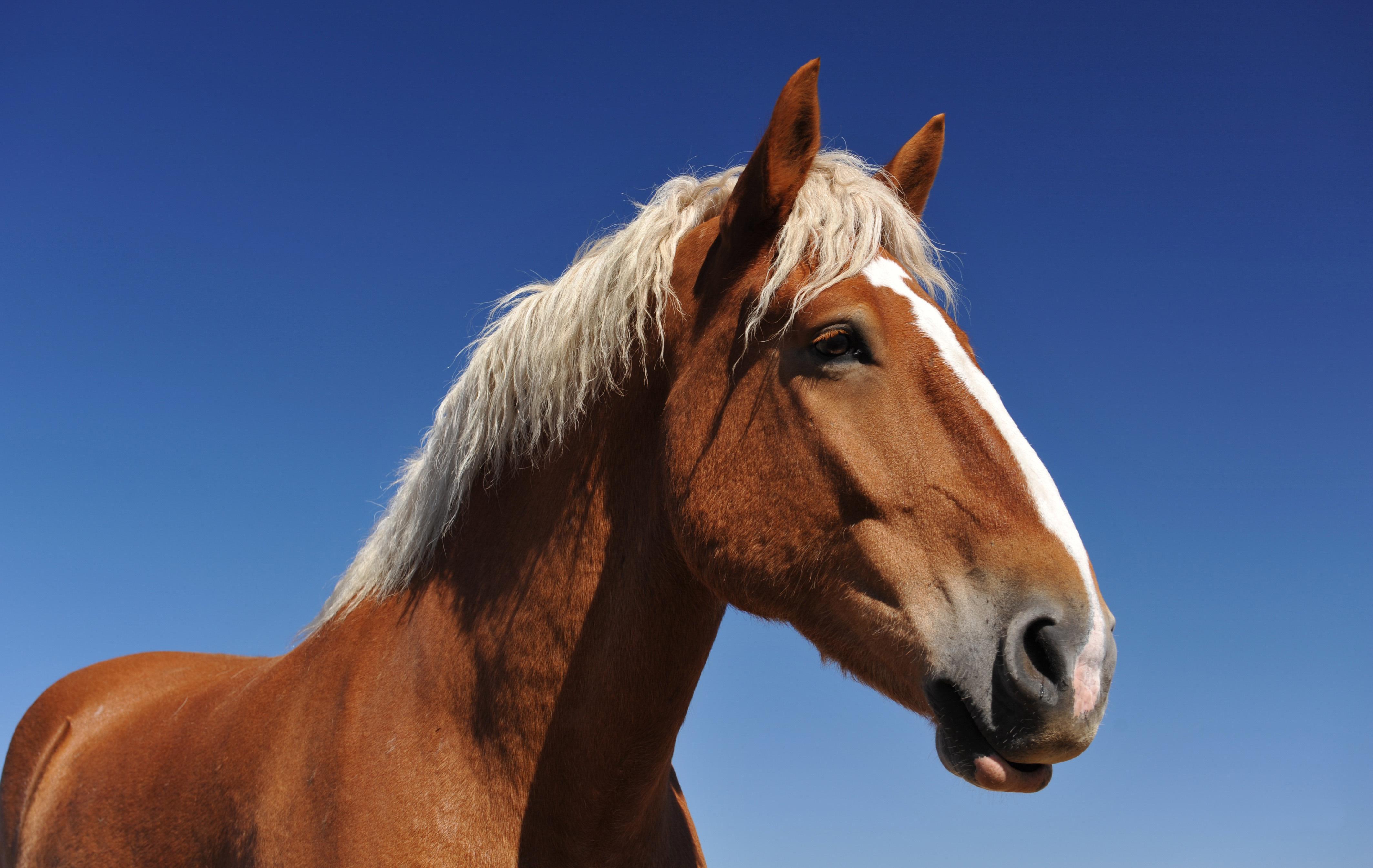 лошадь с гривой  № 3127163 без смс