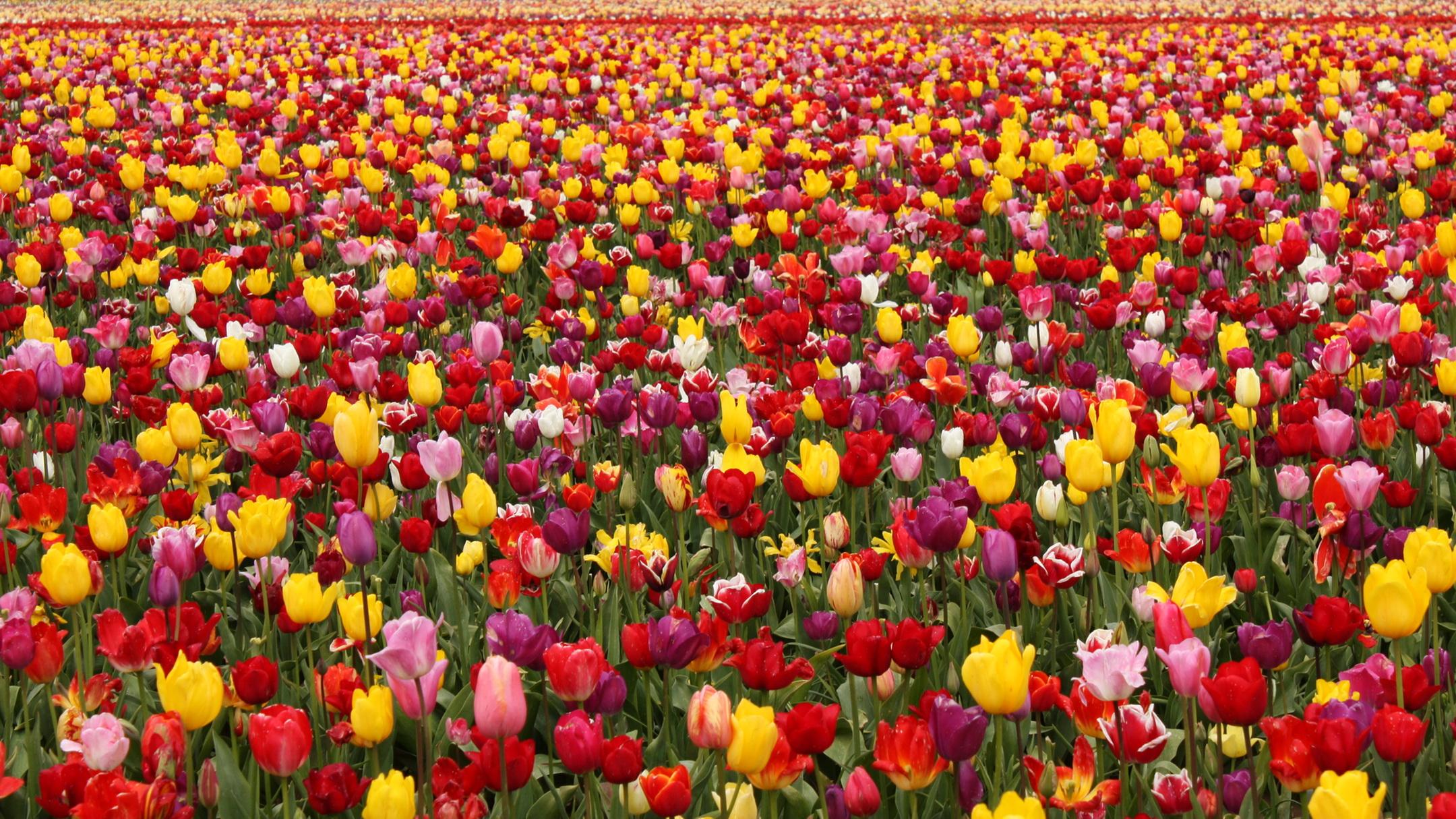 поле цветы фото