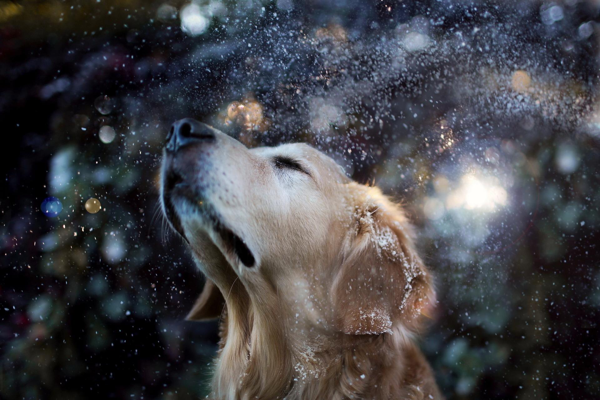 собака снег морда одиночество скачать