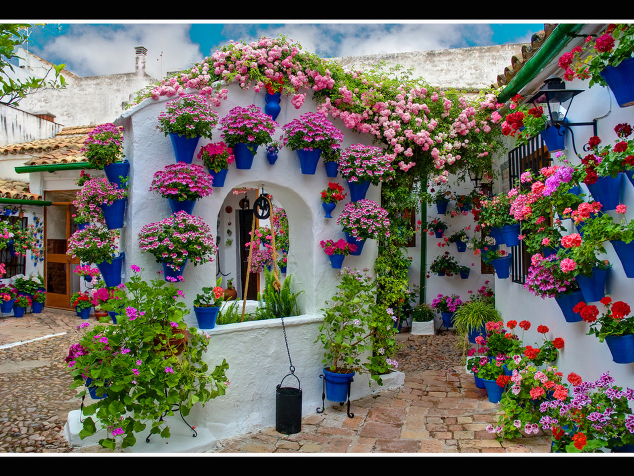 Цветы в городе картинки фото