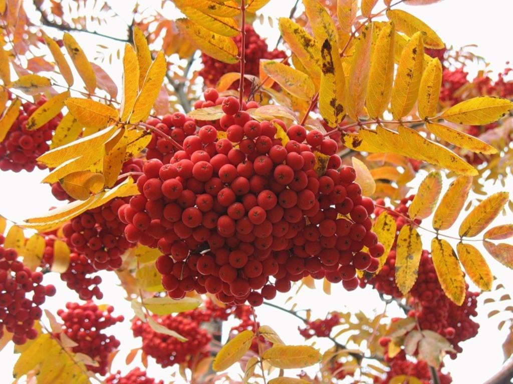 Дары природы Времена года Осень - Природа