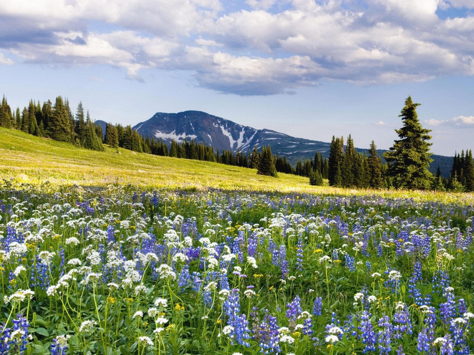 поляна цветы трава холмы горы glade flowers grass hills mountains  № 1829218  скачать