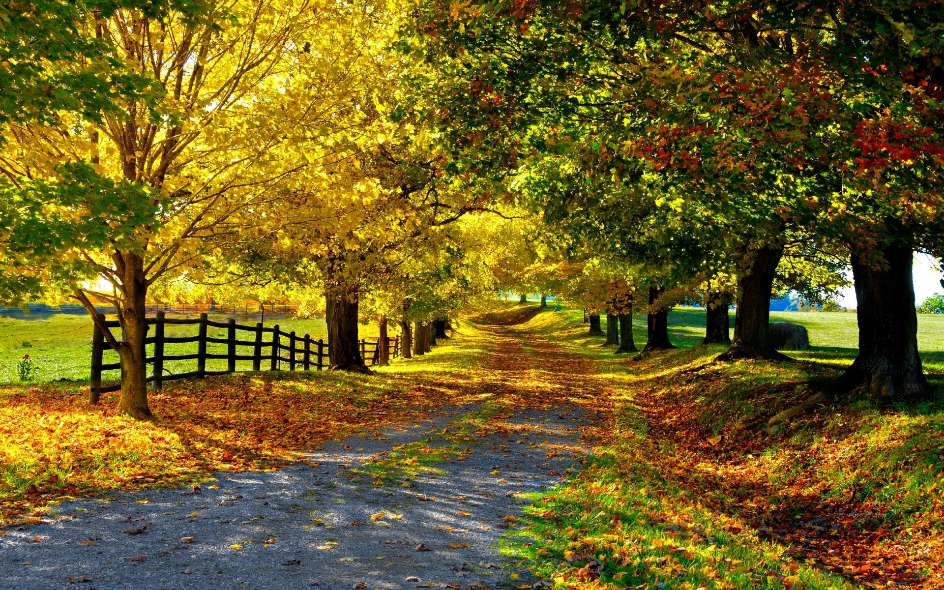 обои широкоформатные на рабочий стол бесплатно красивая природа осень № 241118 загрузить
