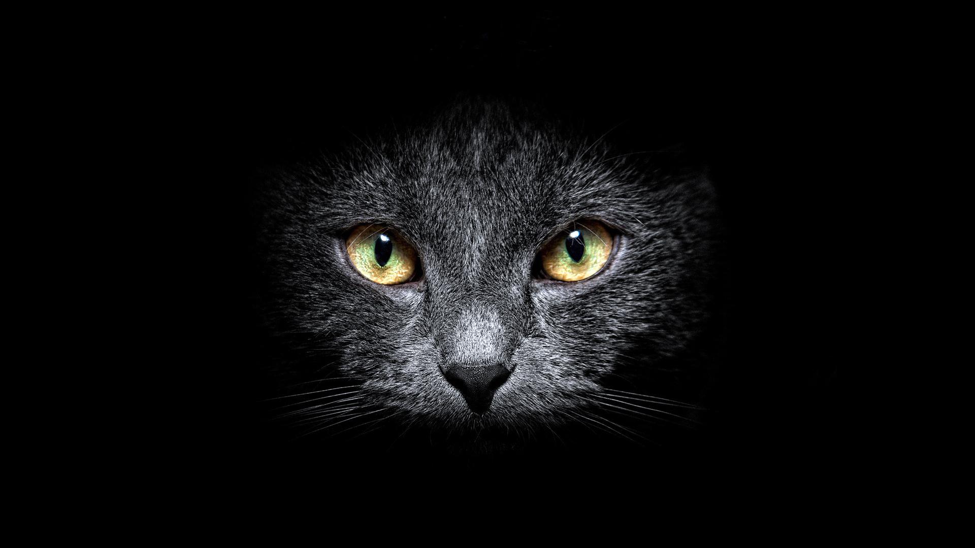 Белый котенок в темноте бесплатно