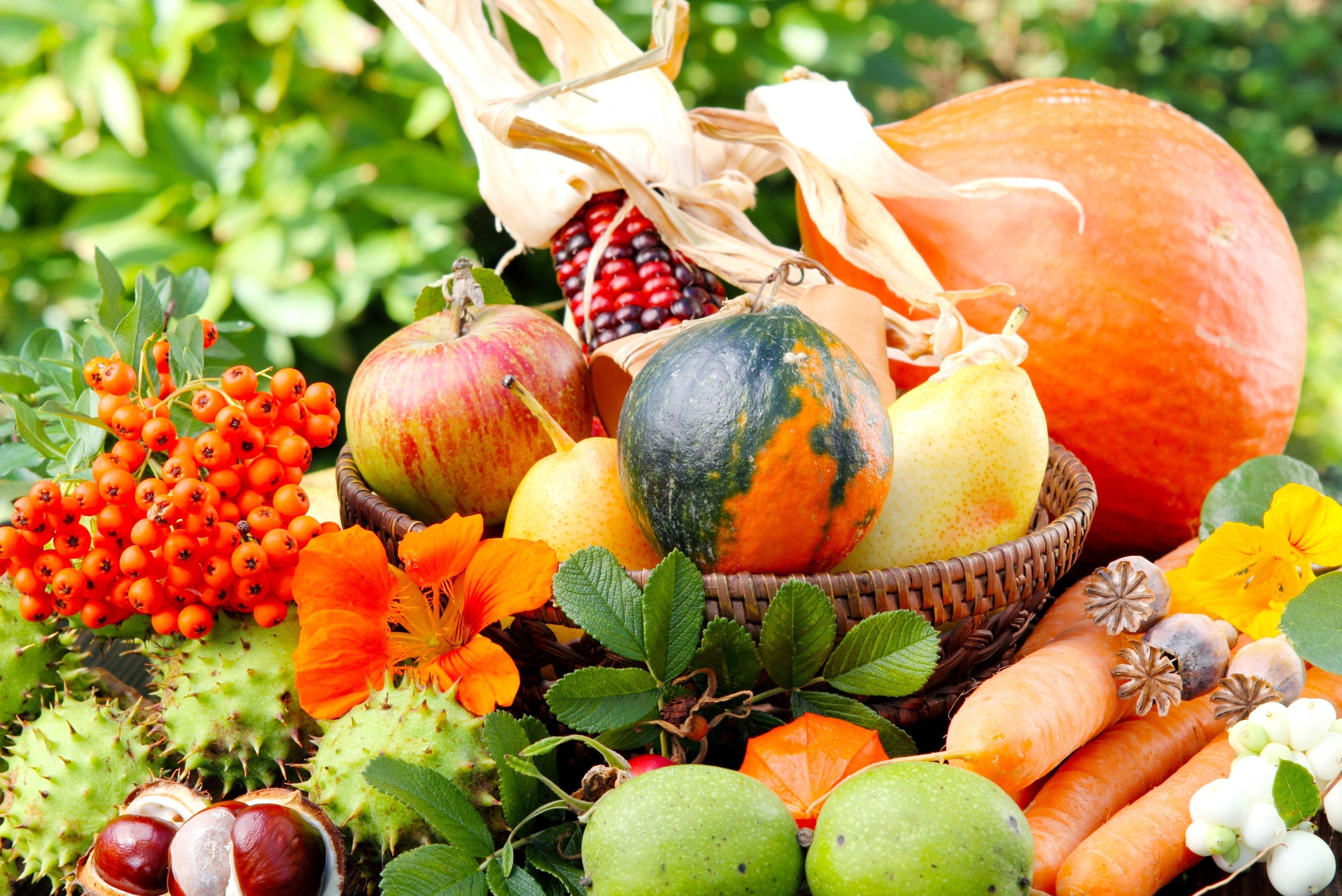 овощи грибы фрукты загрузить