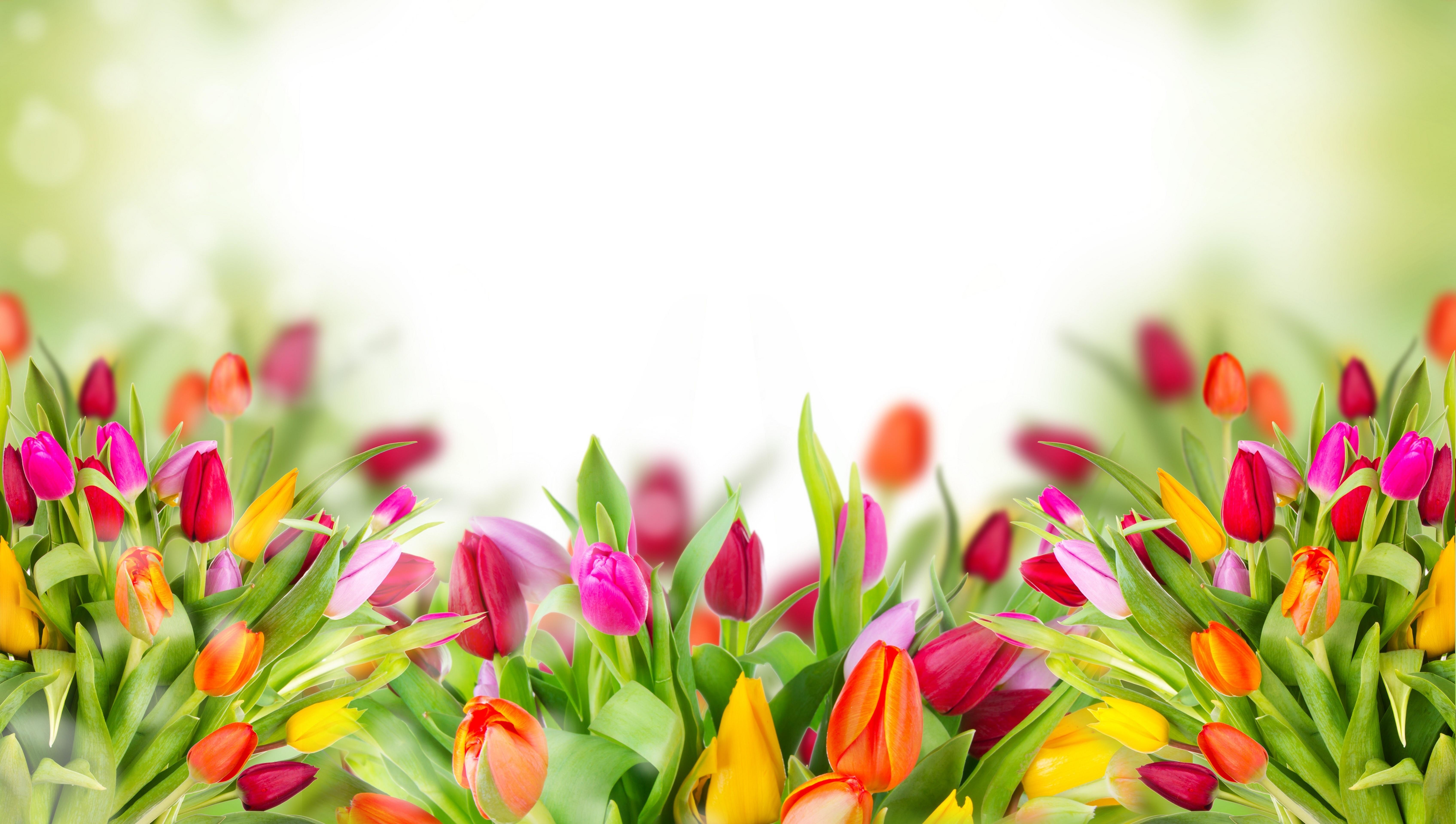 букет,тюльпаны,листья  № 415794 загрузить