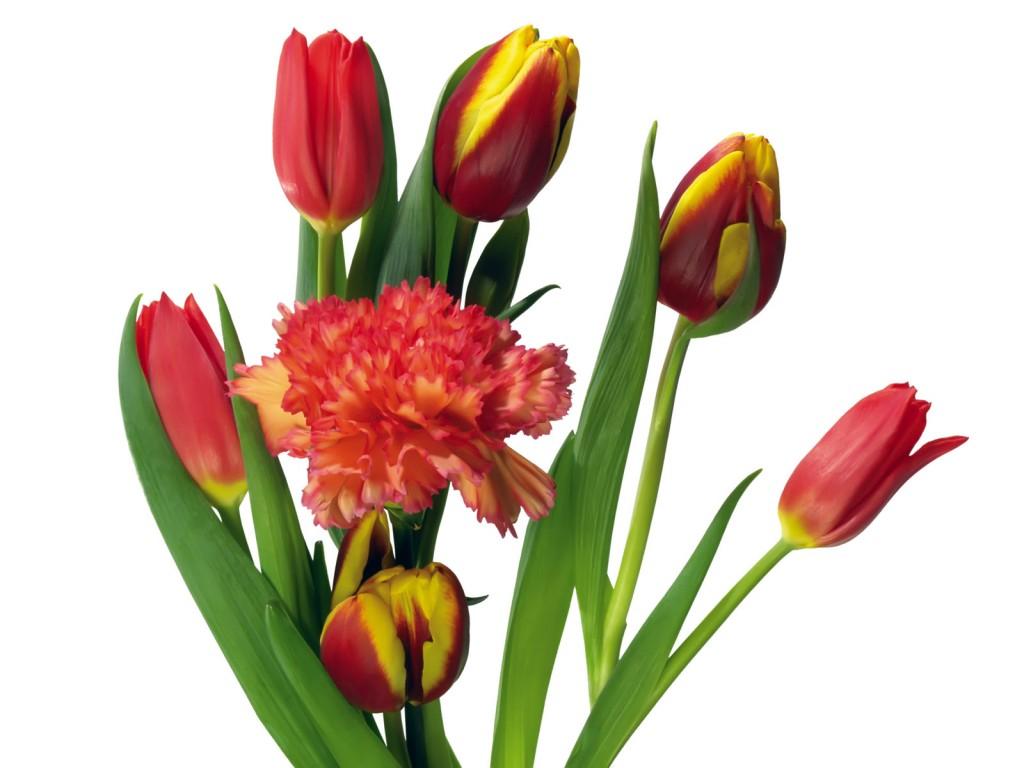 Букет цветов картинки 7
