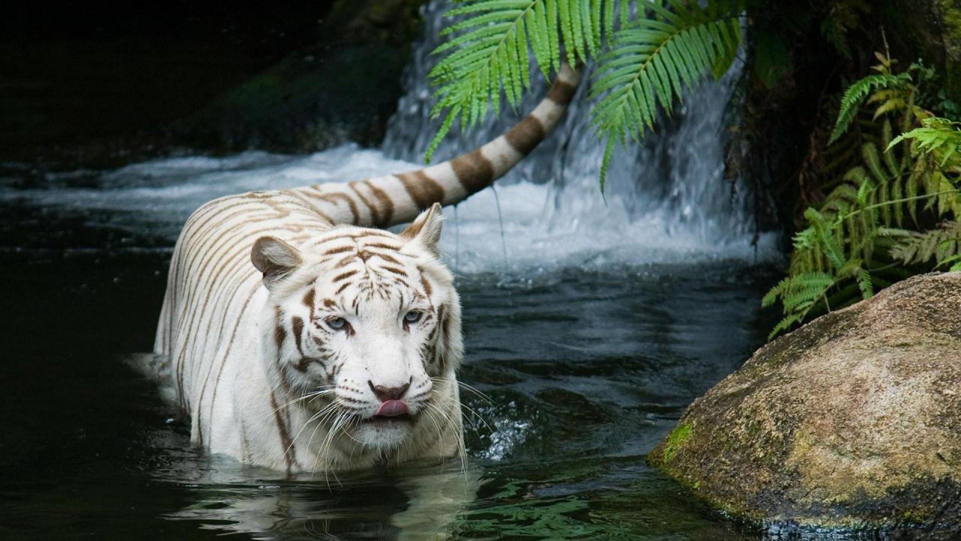 природа животные кот белый nature animals cat white  № 102736 без смс