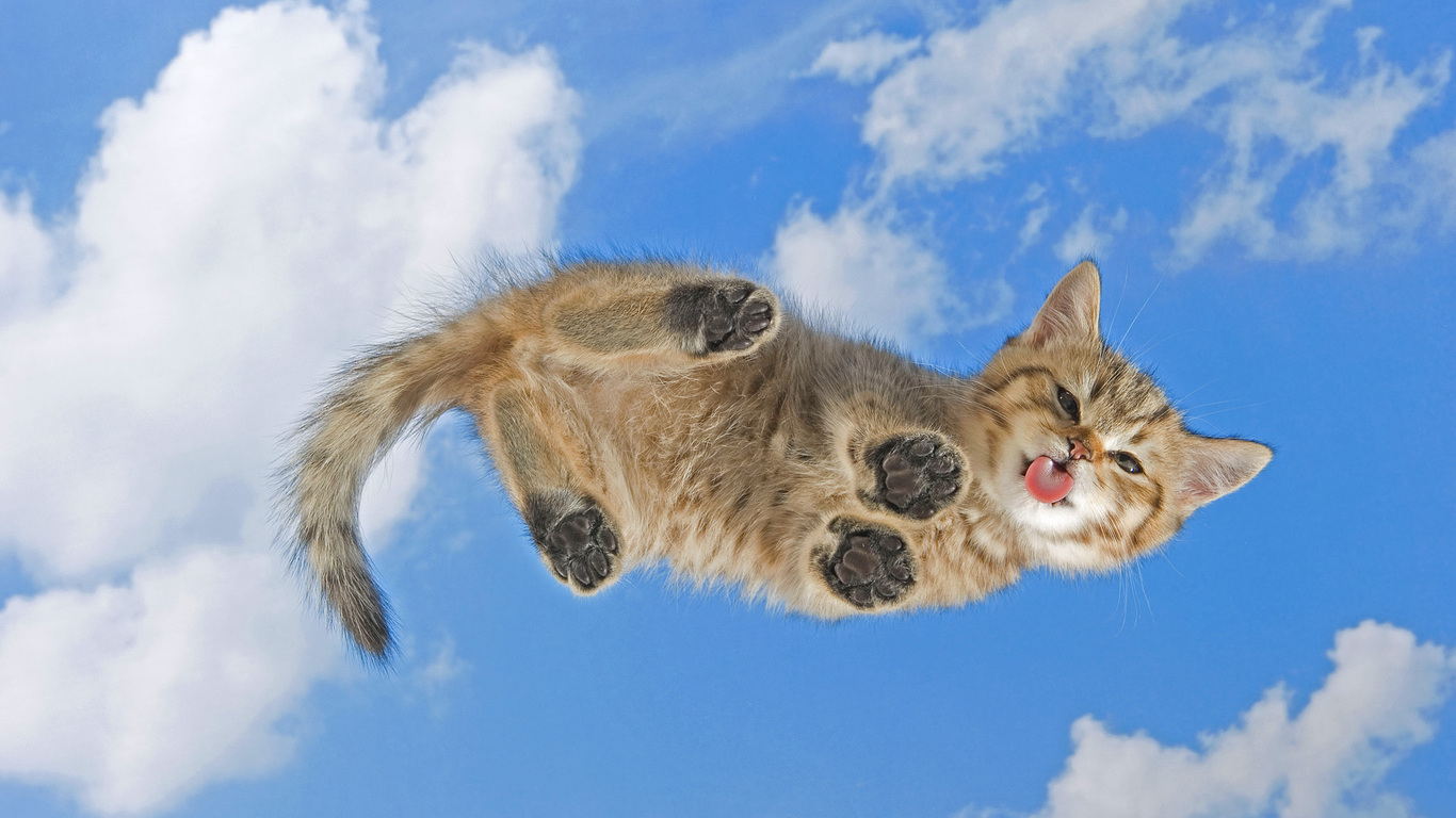 забавный котенок бесплатно