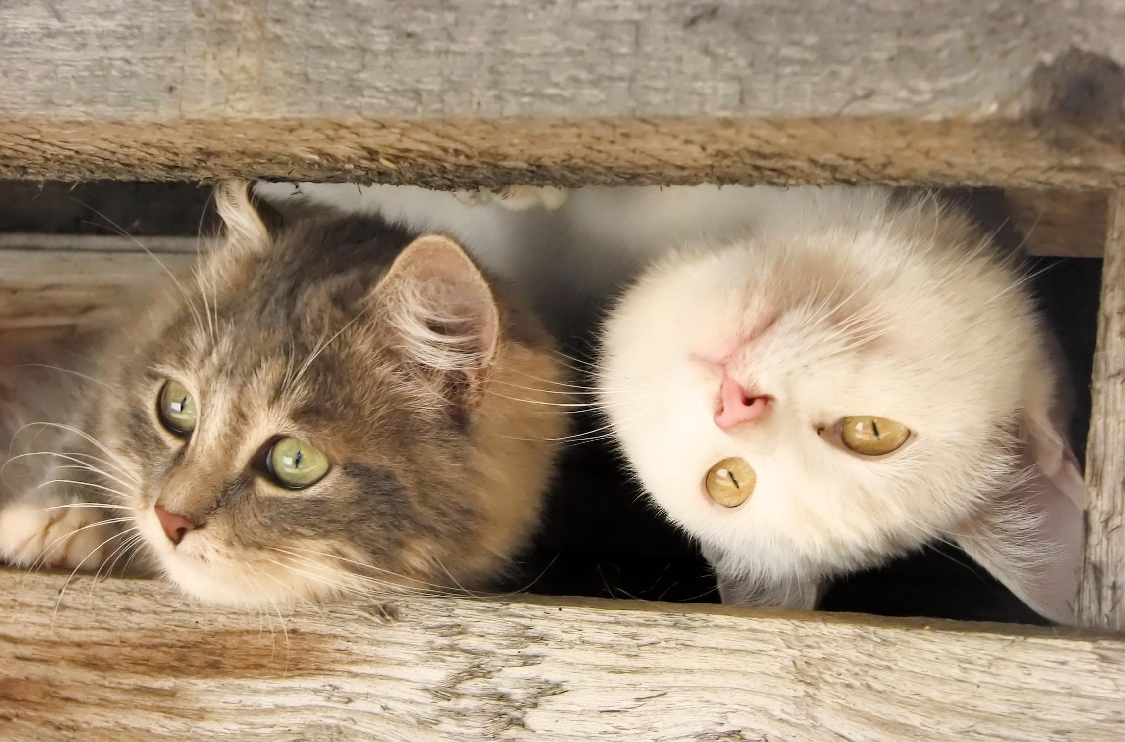 обои на рабочий стол котята прикольные с надписью № 252022 без смс