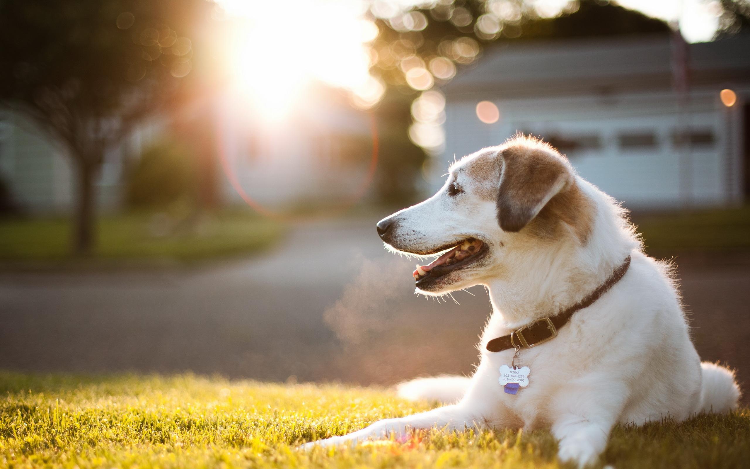 Собака на улице загрузить