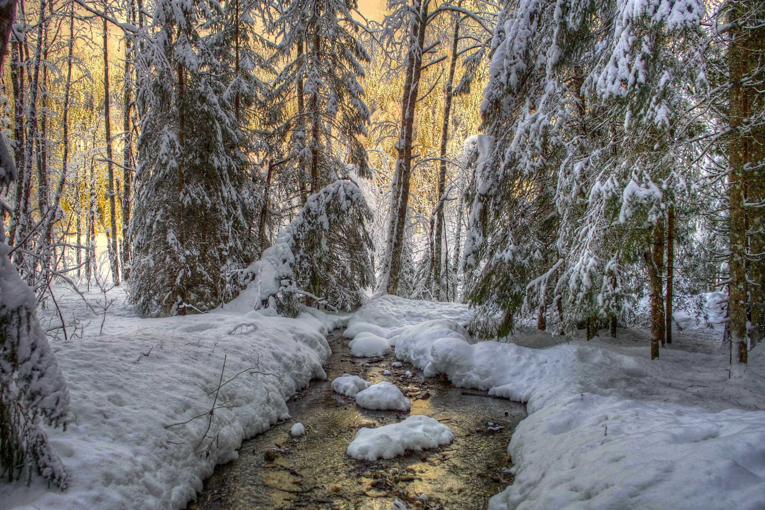 природа река снег зима деревья nature river snow winter trees без смс