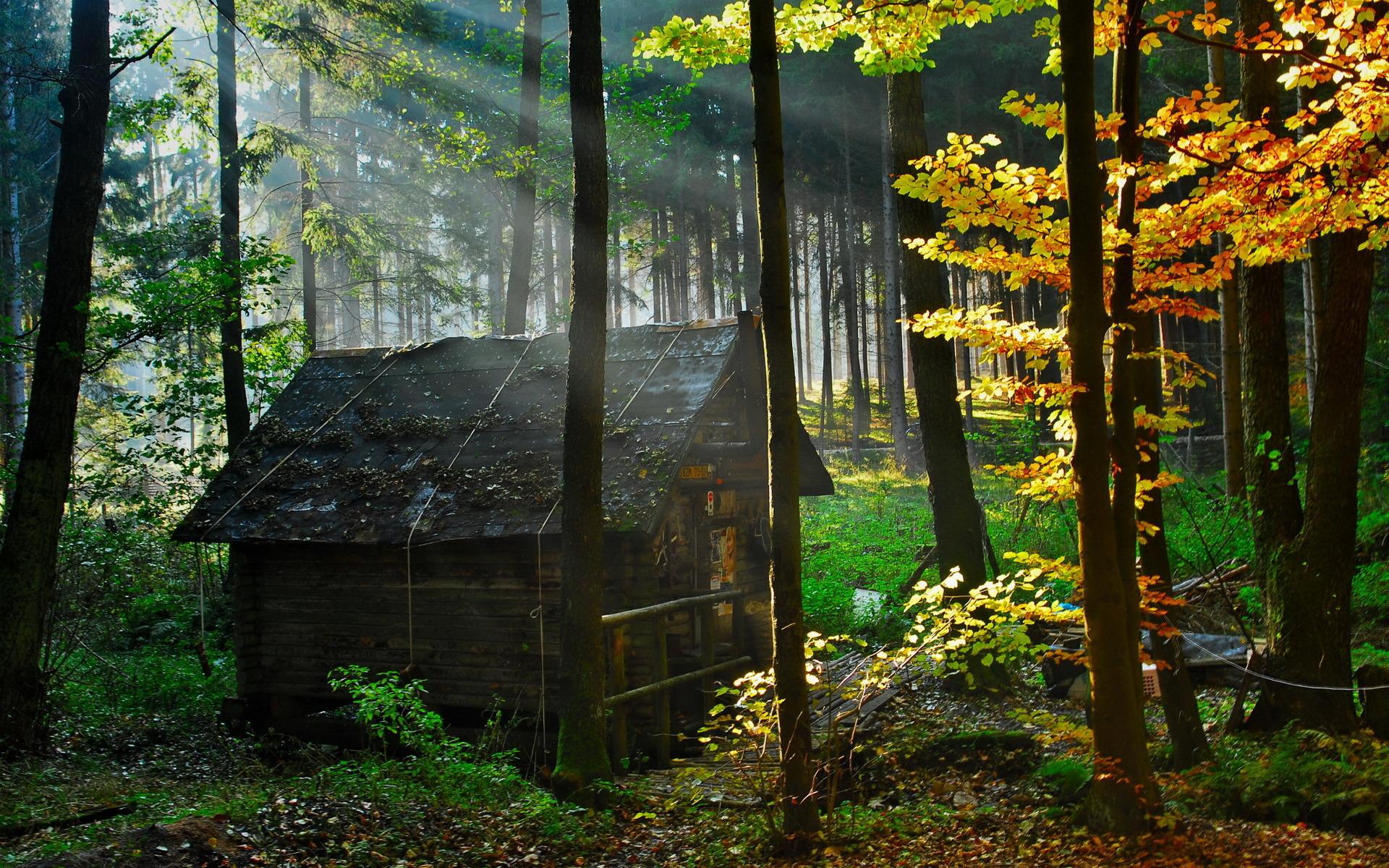 природа отдых дом деревья  № 254089 бесплатно