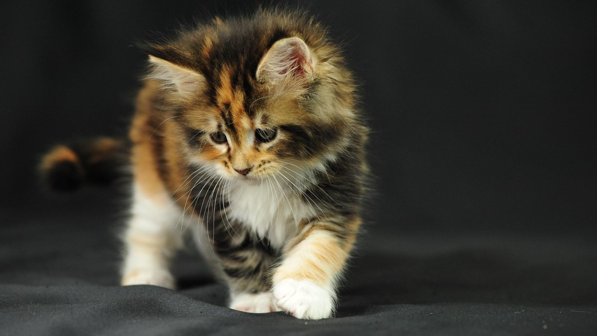 котенок хвост дыбом поле бесплатно