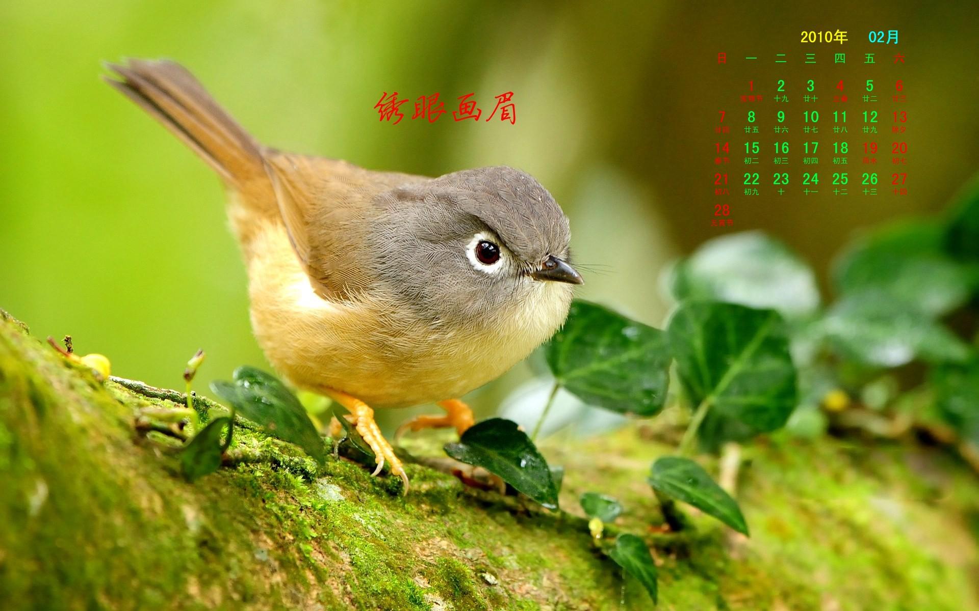худенькая птичка на лужайке без смс