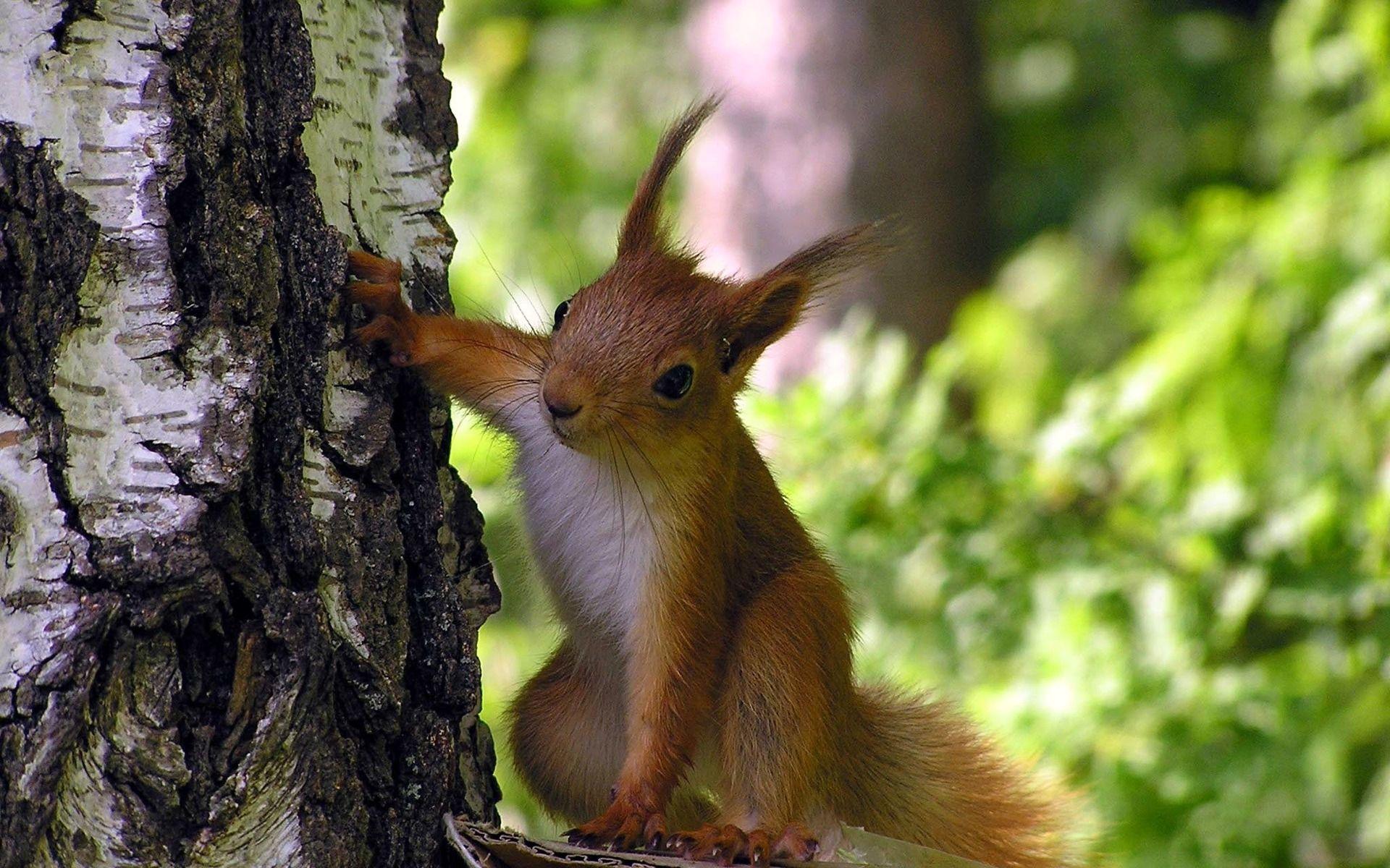 Чучела животных купить недорого чучело маленьких зверей