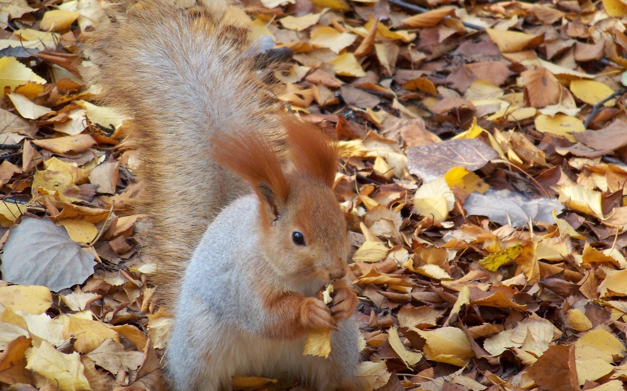 картинки осень с животными: