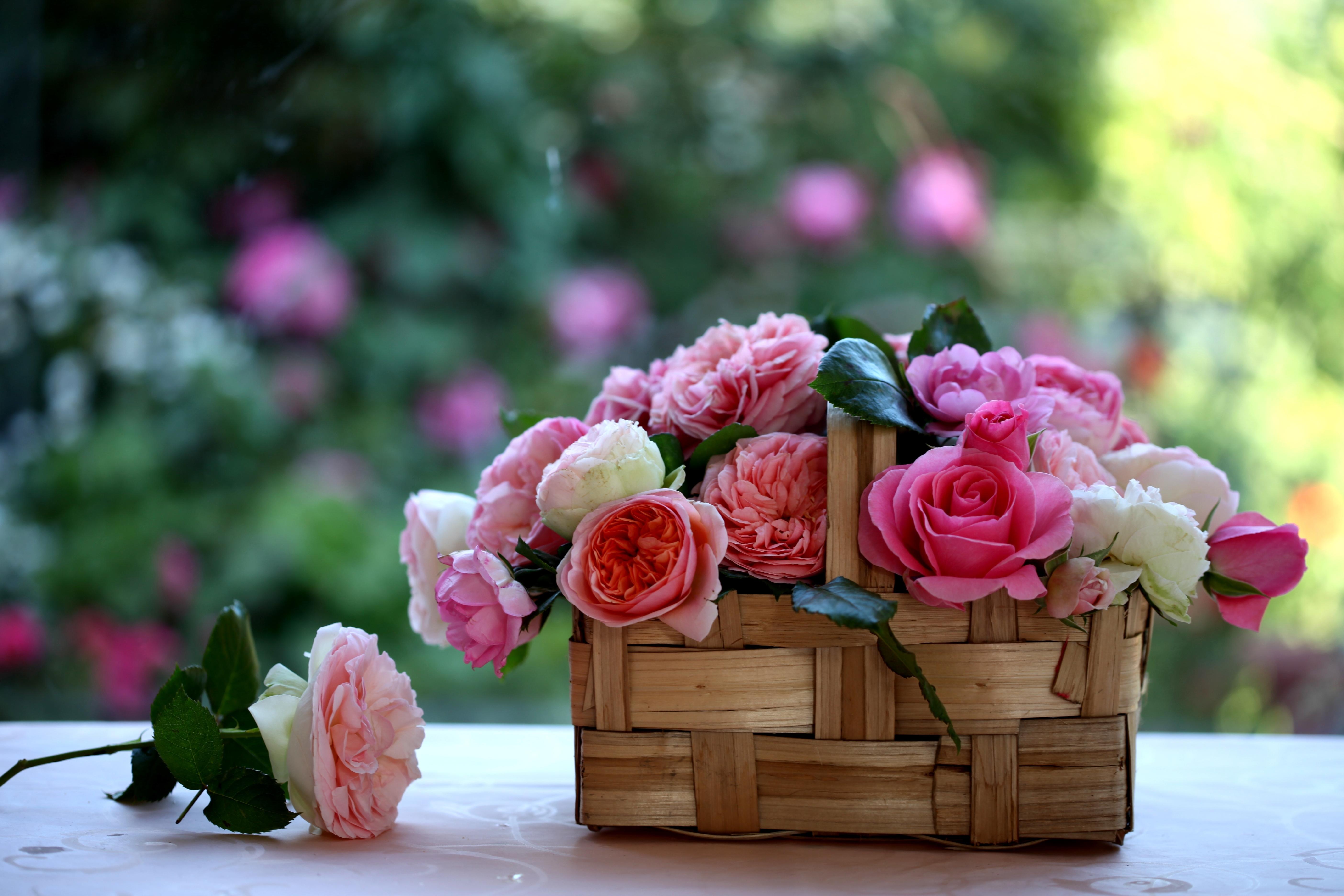 цветы букет розы скамейка природа бесплатно