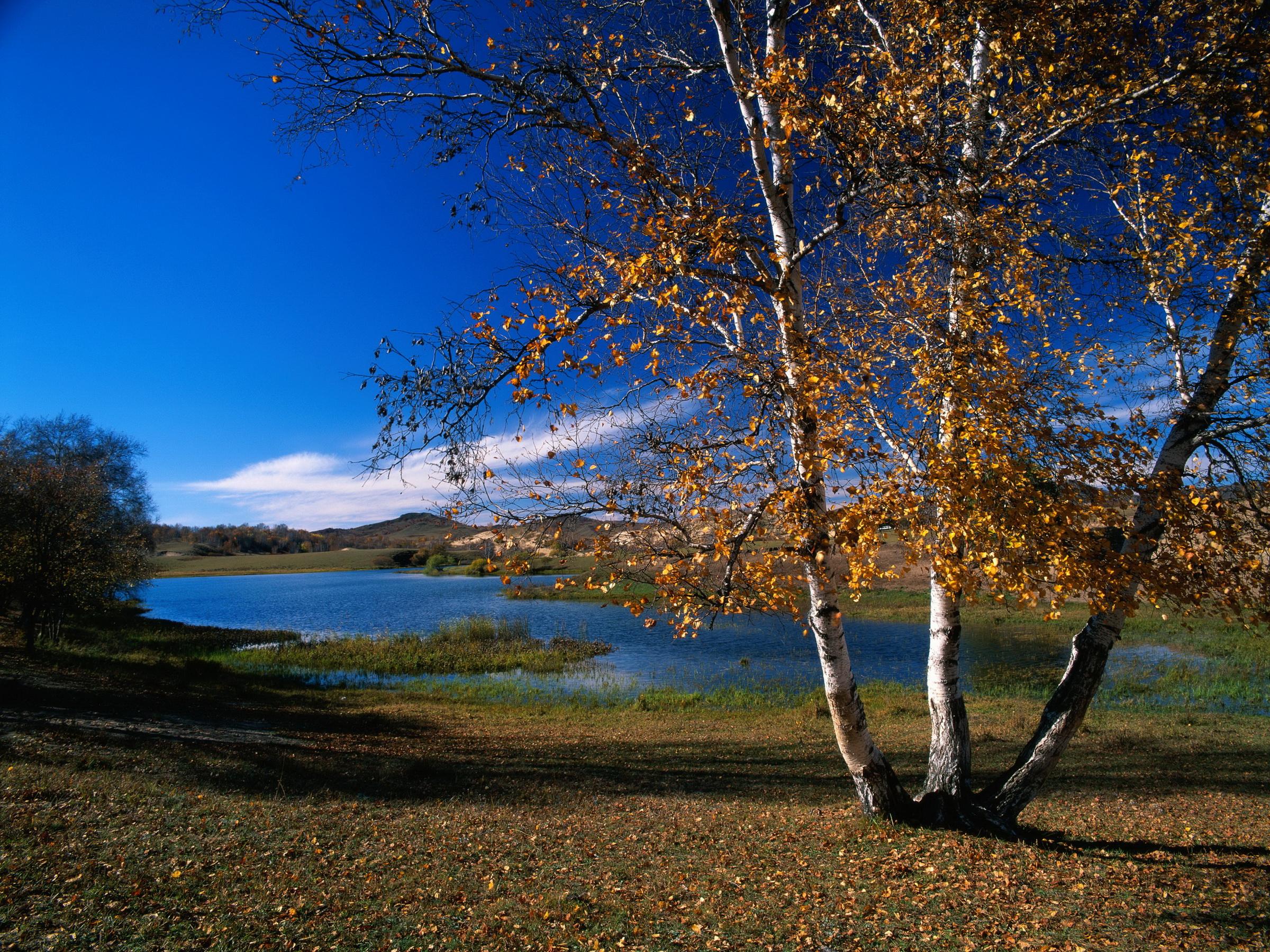 осень озеро природа облака деревья  № 2491580 загрузить
