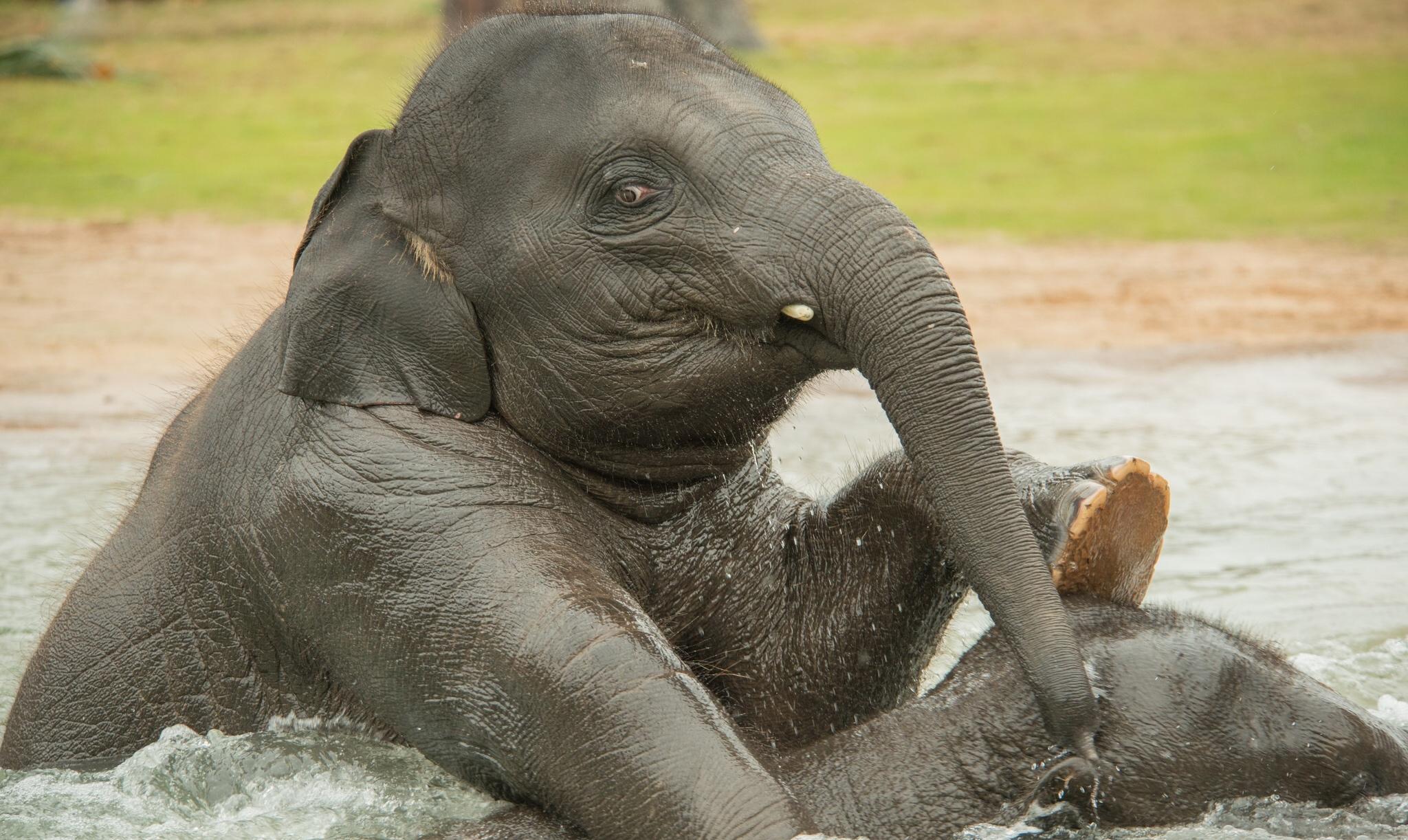 Слон  № 1010780 без смс