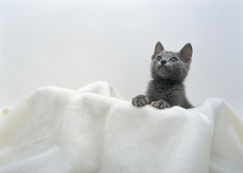 котенок дымчатый kitten smoky  № 2344462 загрузить