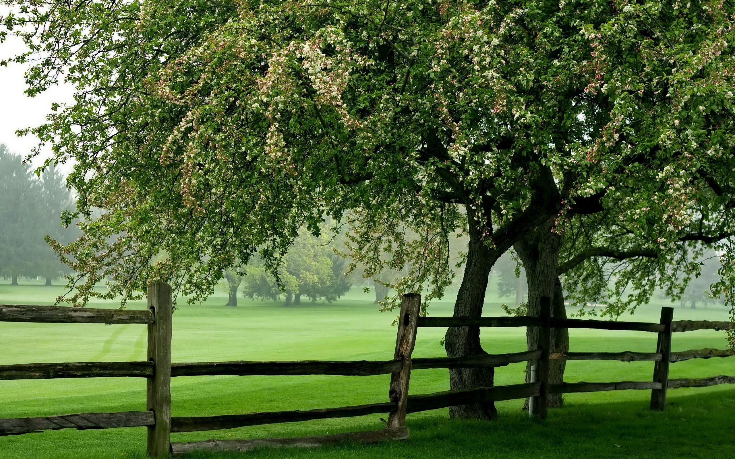 дерево поле  № 439048 загрузить