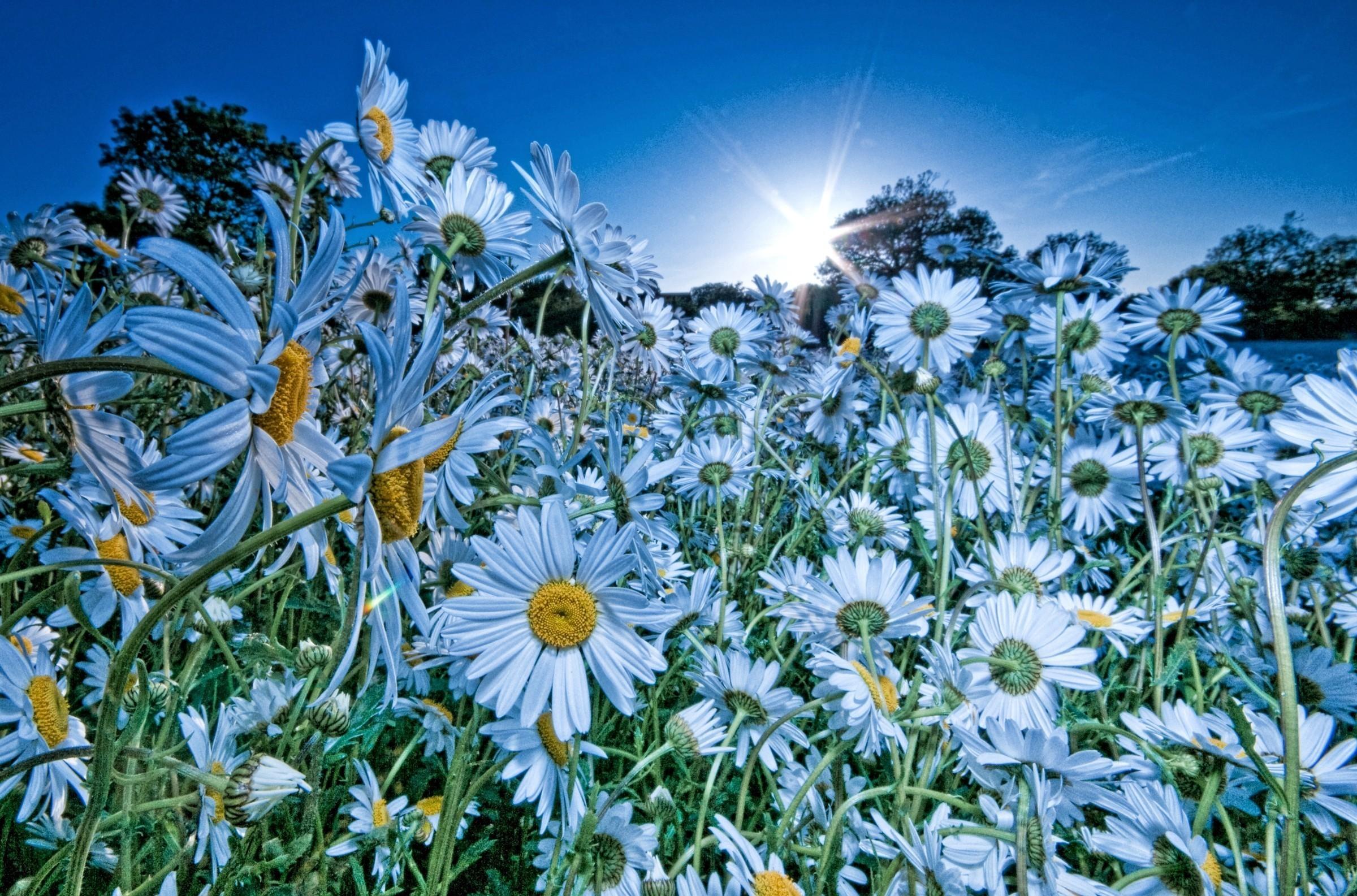 природа цветы голубые  № 1334442 загрузить
