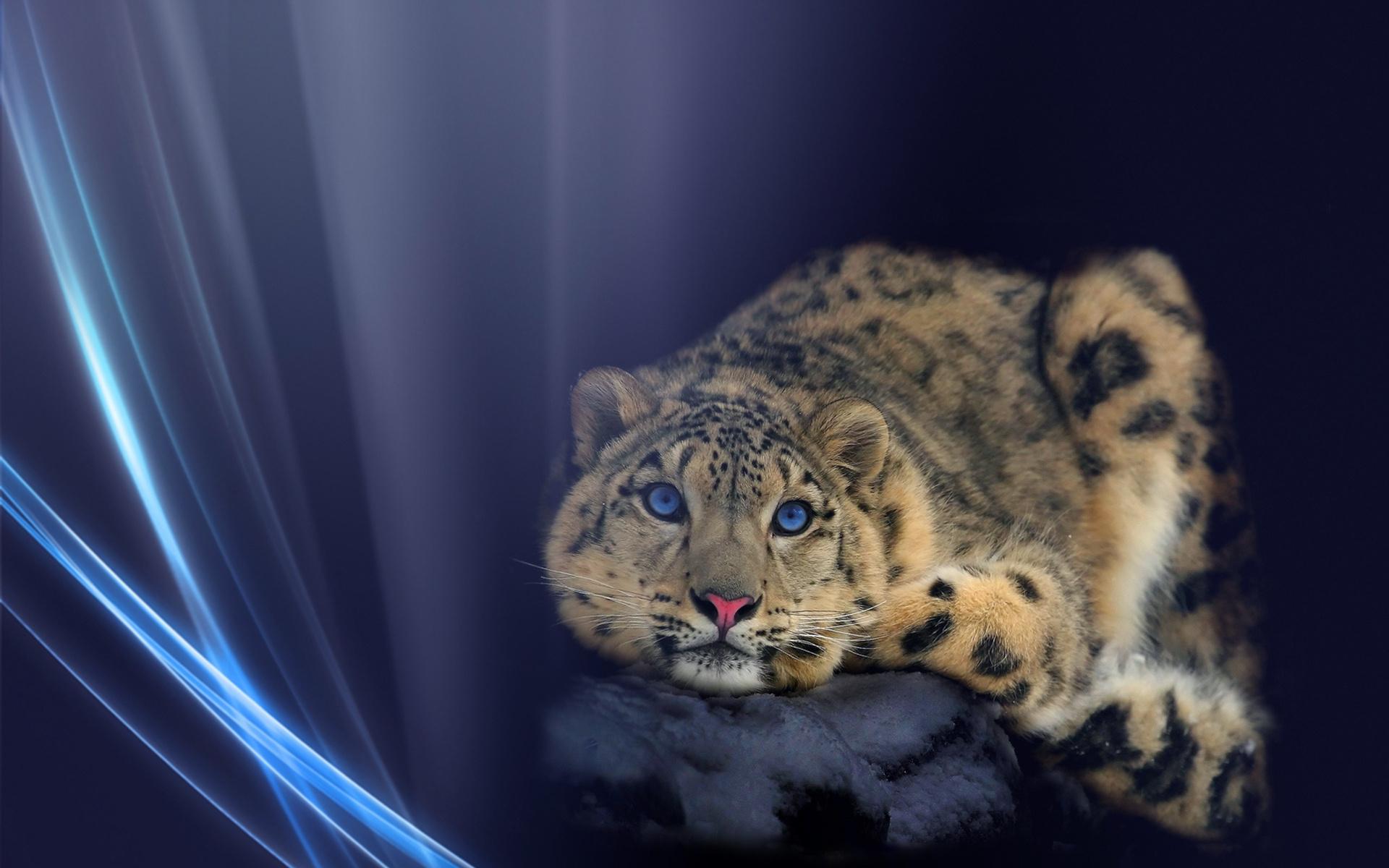 животные снежный леопард загрузить