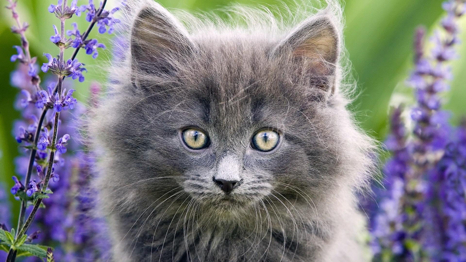 котята сирень умиление без смс