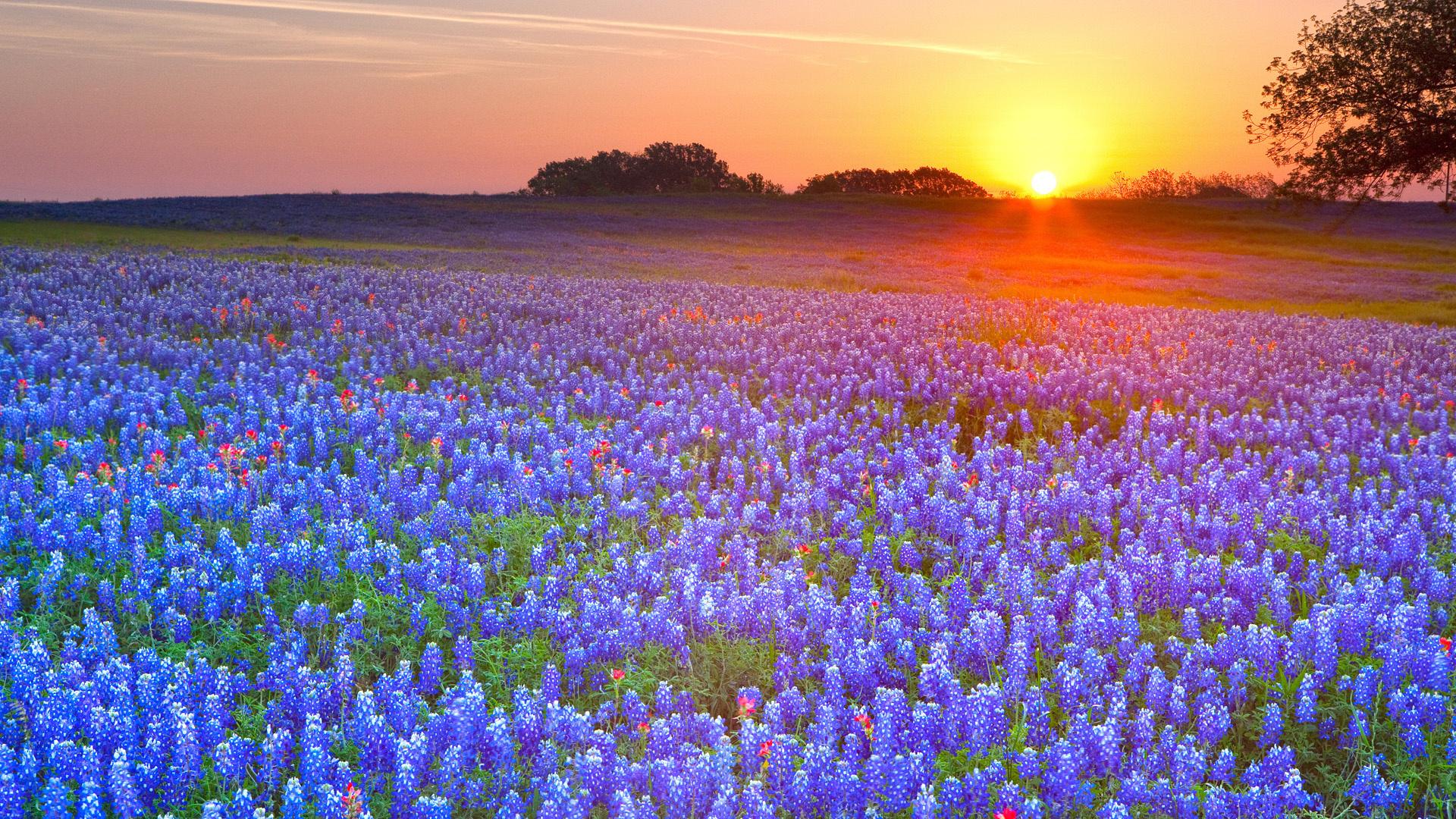 Фото цветы природа на рабочий стол
