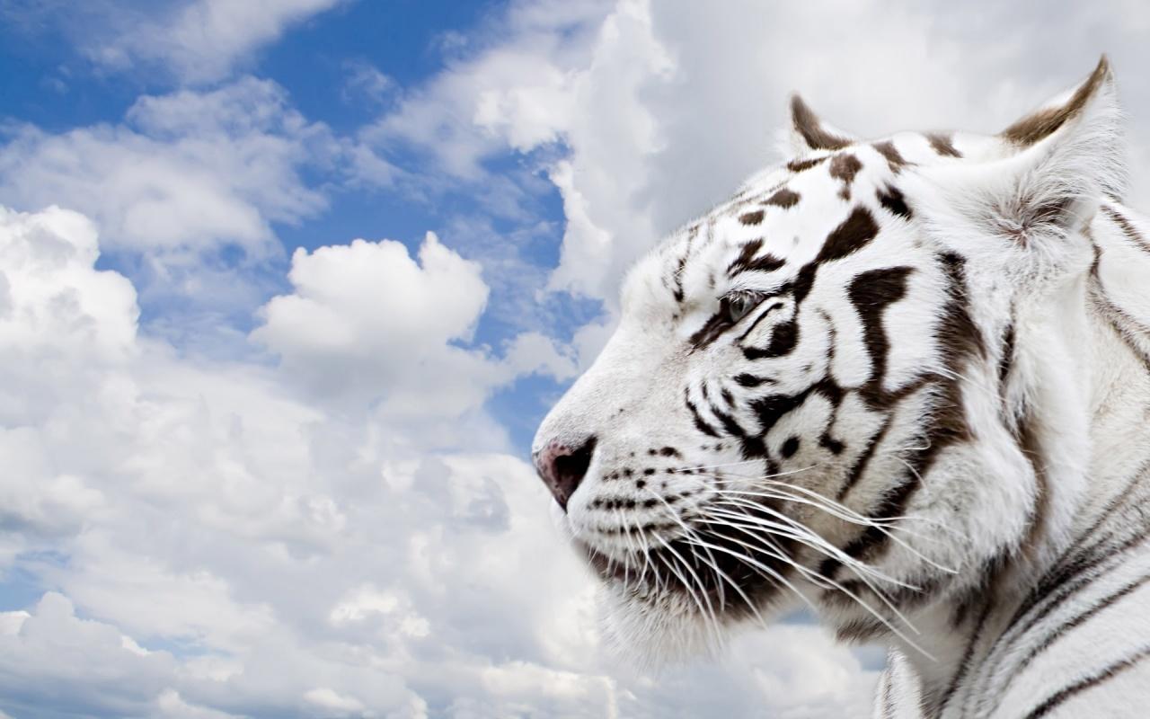 Espectaculares fotos de animales 76