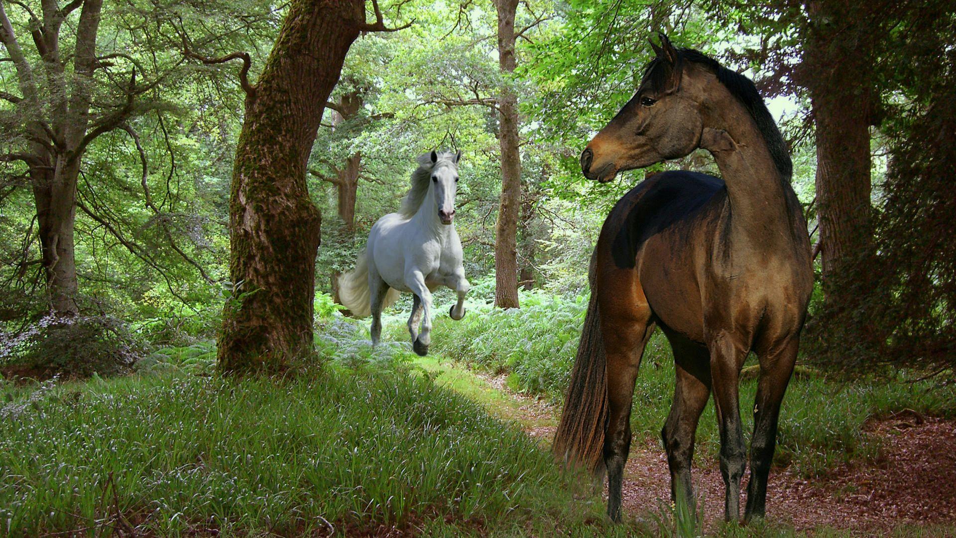 обои на рабочий стол 1920 1080 с лошадьми № 251446 бесплатно