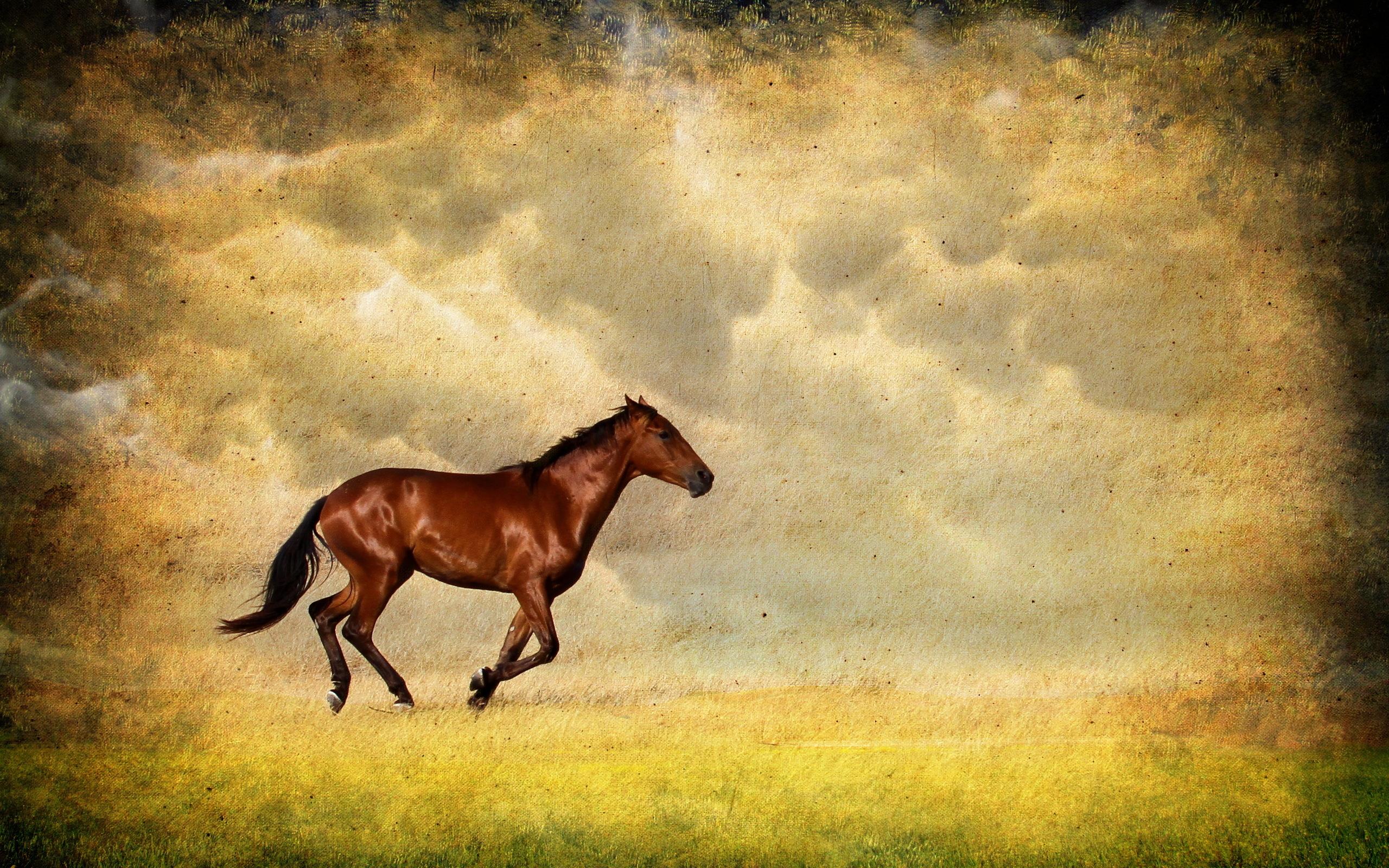 Лошади в поле  № 2021289 загрузить