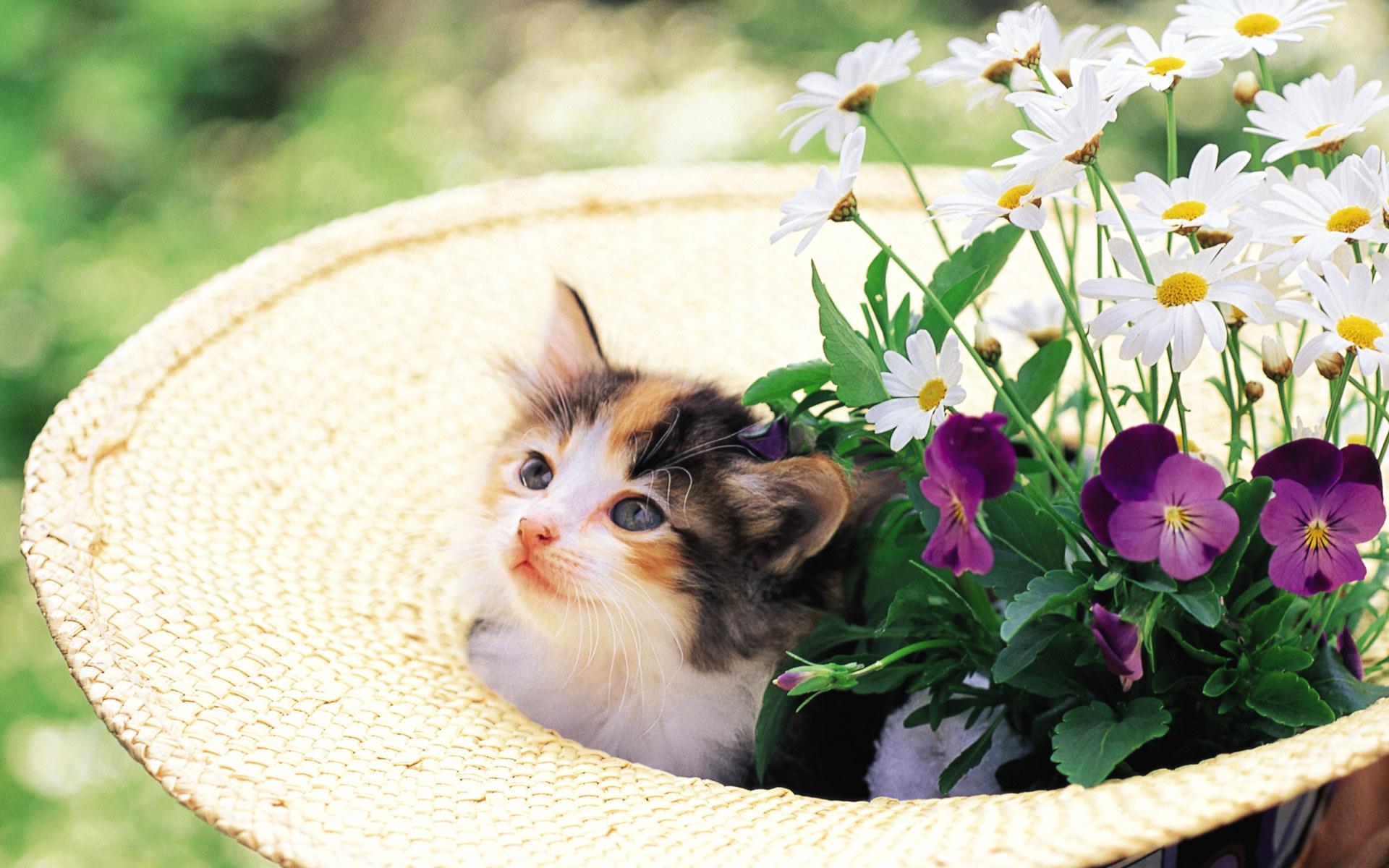 竹籃裡的可愛小貓咪桌布圖片2  貓貓桌布酷 wallcoocom