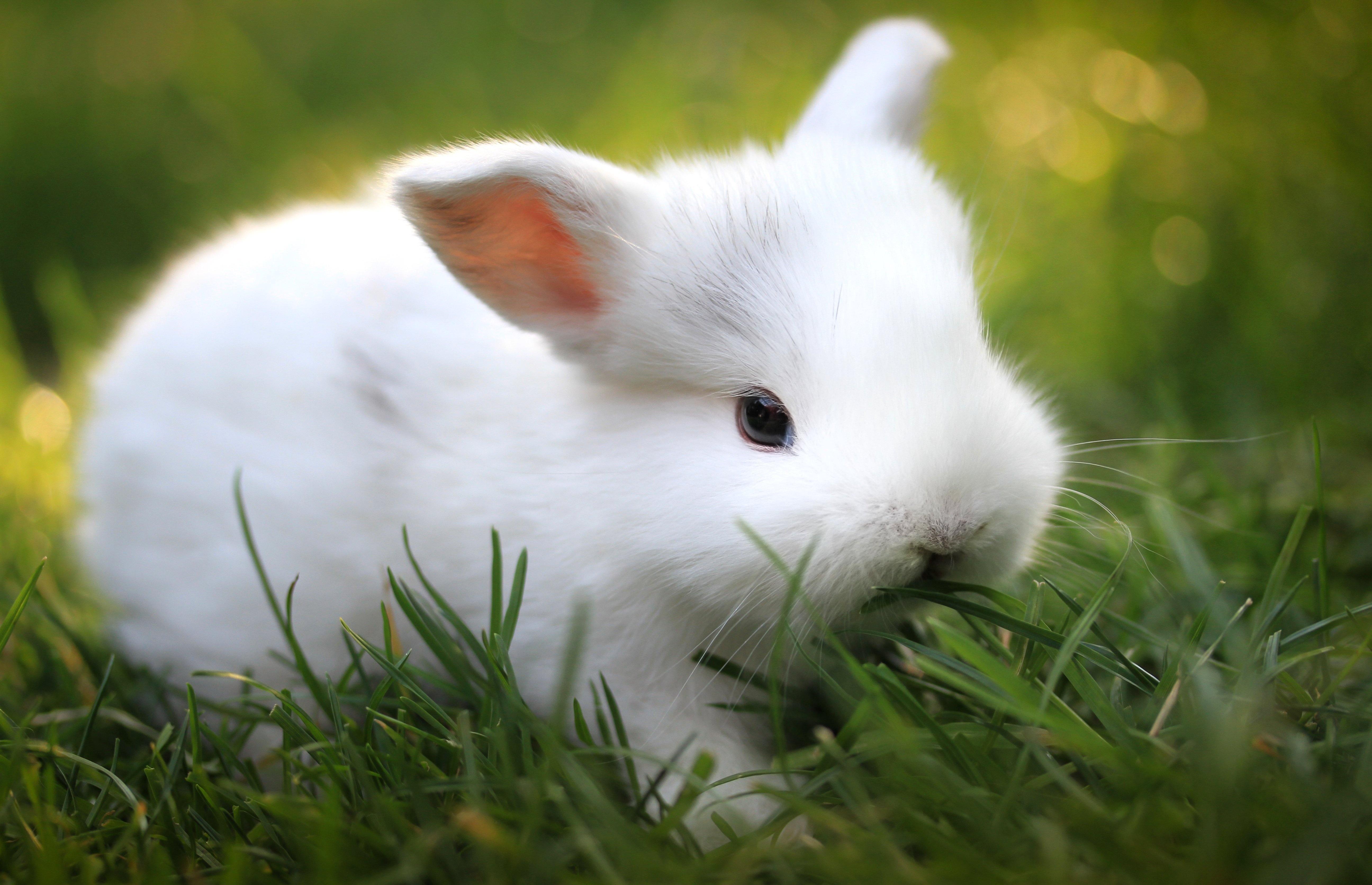 Кролик макро  № 3207693 бесплатно