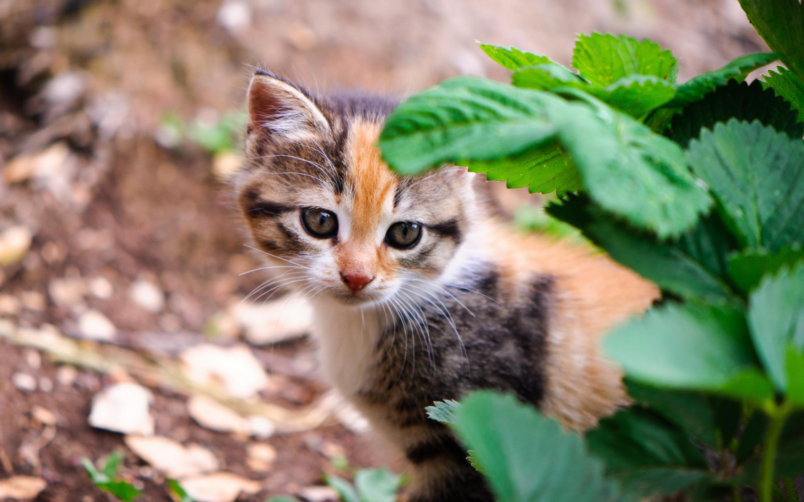 природа животное котенок кот  № 1981231 без смс