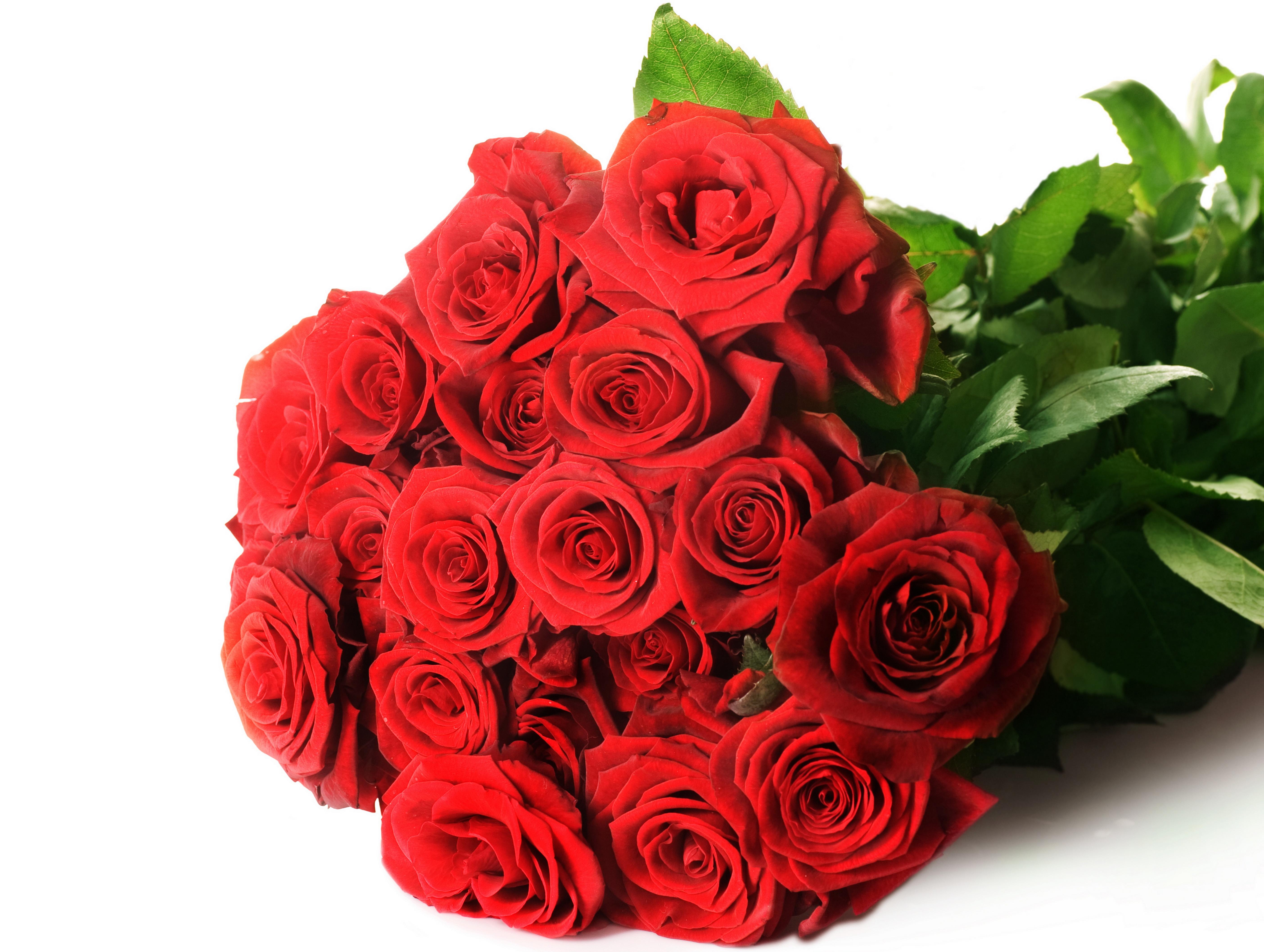 Цветы и розы