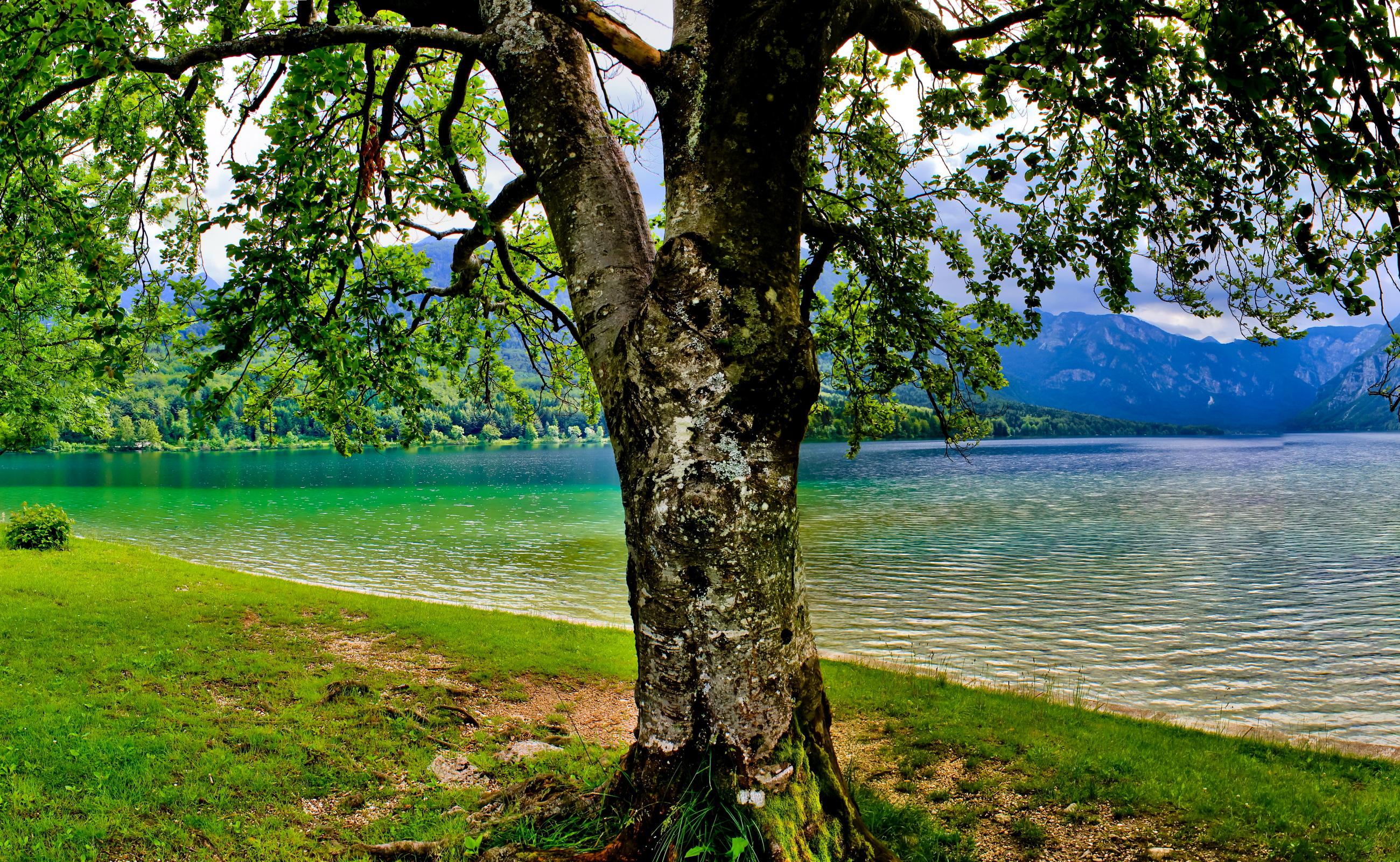 березы берег озеро  № 1195457 без смс