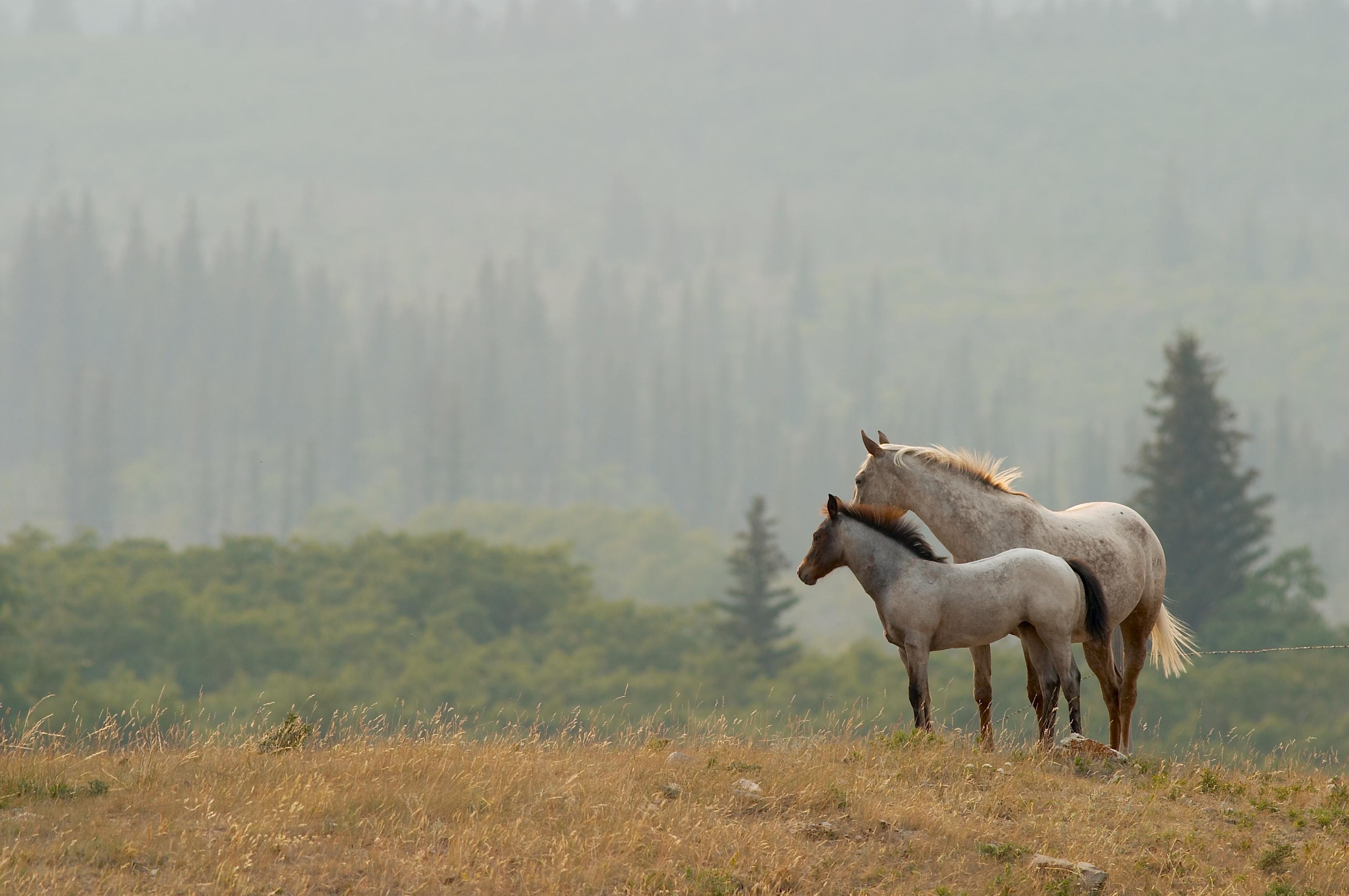 Пони степь скачать