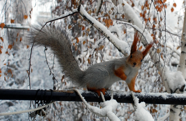 природа животные птицы деревья зима снег без смс