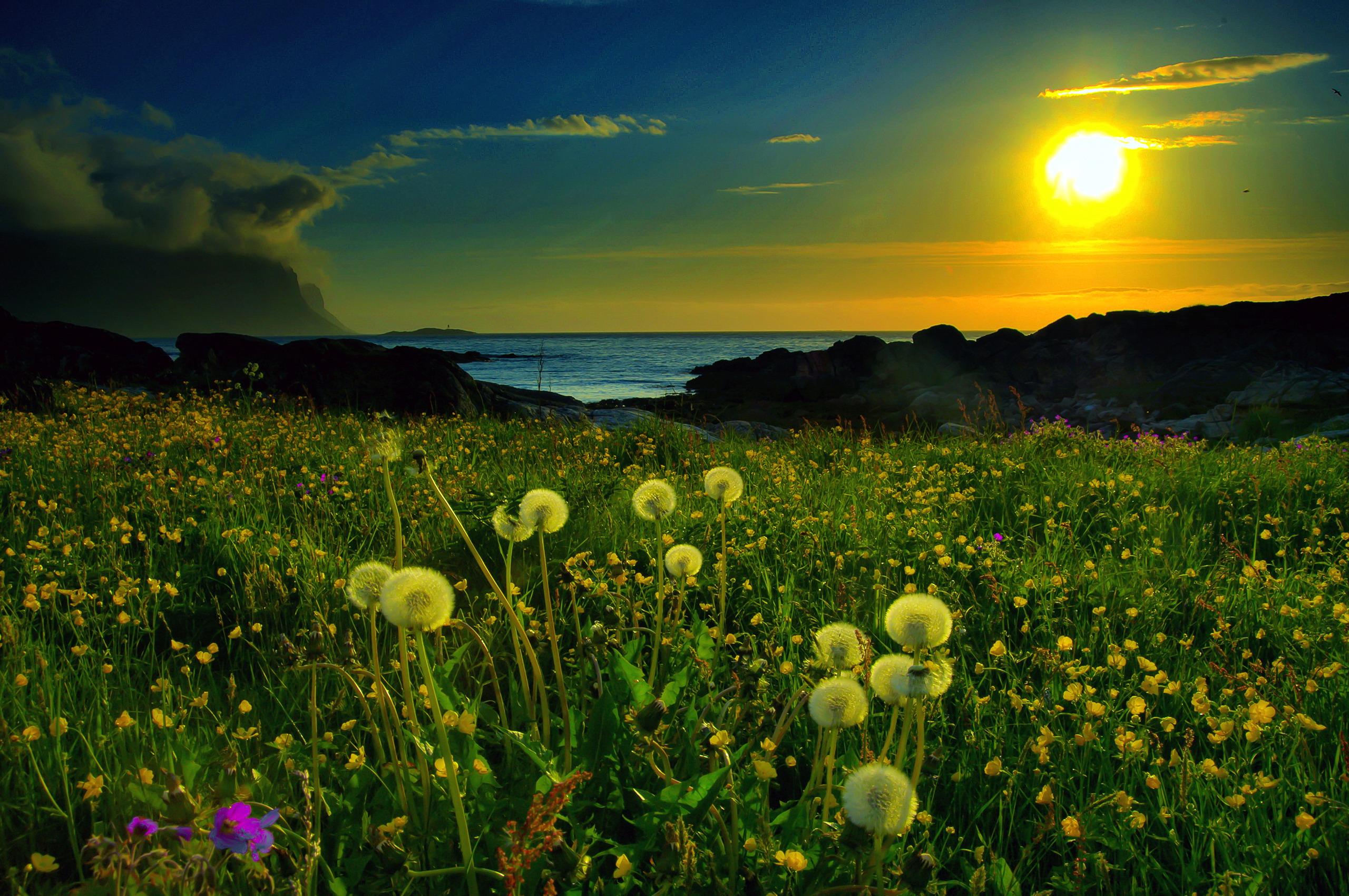природа цветы трава мельниц восход солнце  № 2556607  скачать