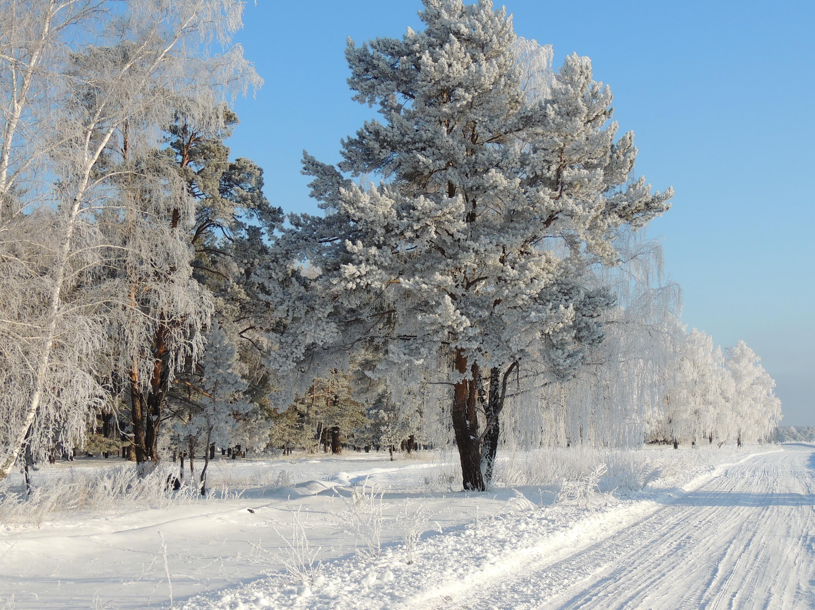 Деревья в инее  № 1191616 загрузить