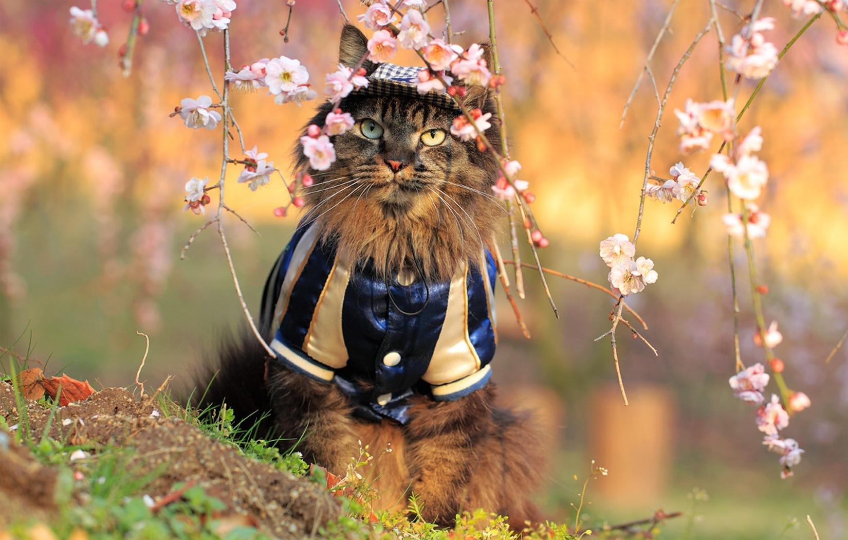 Весенние котики бесплатно