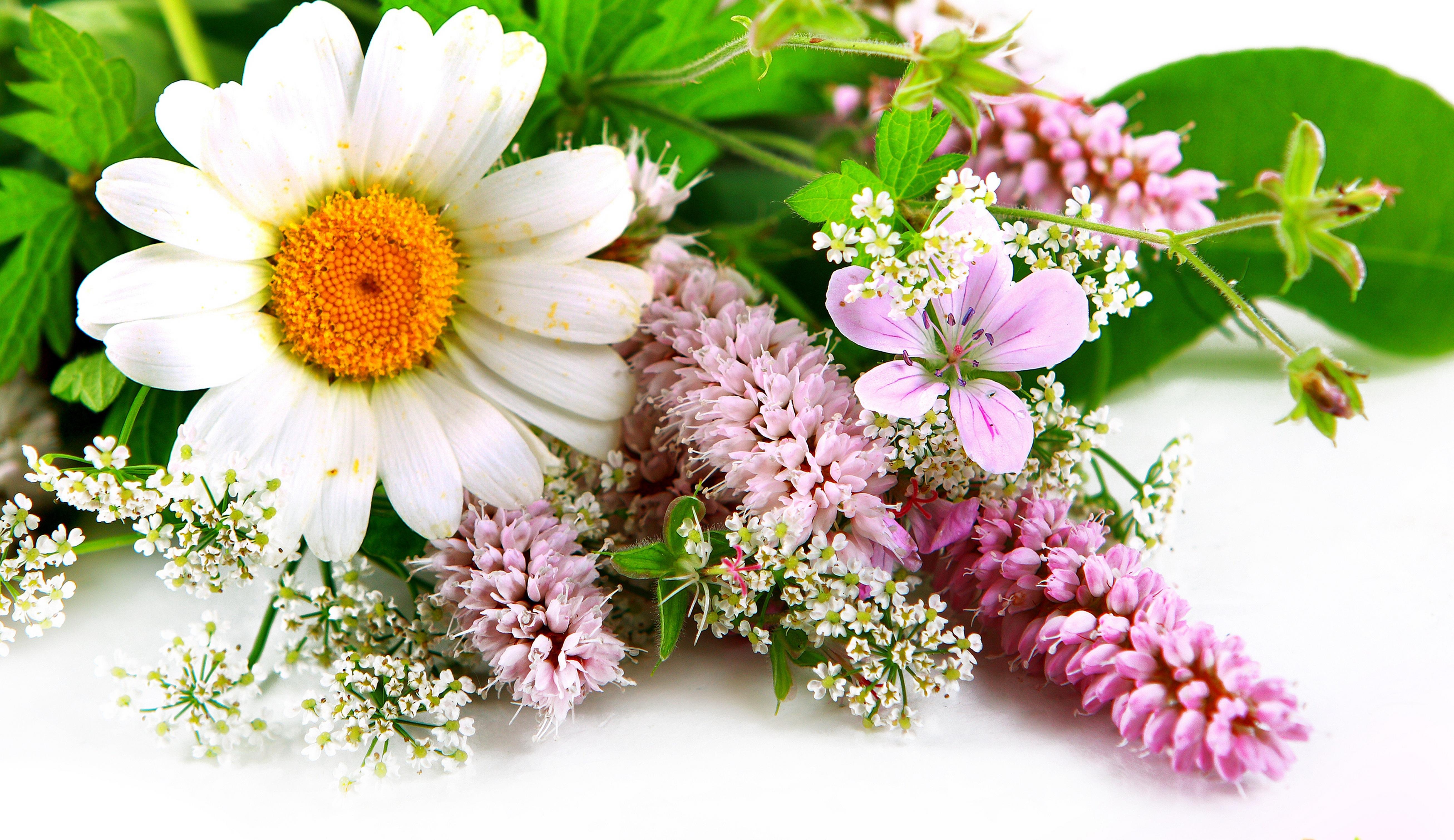 Красивые блокноты с цветами