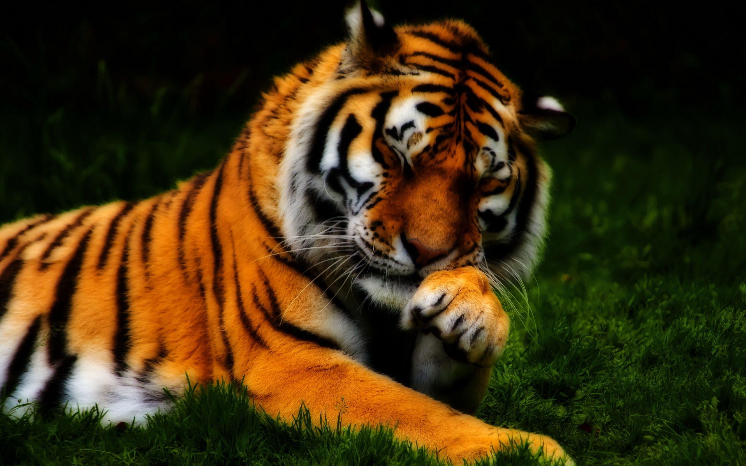 природа животные тигры  № 99253 без смс