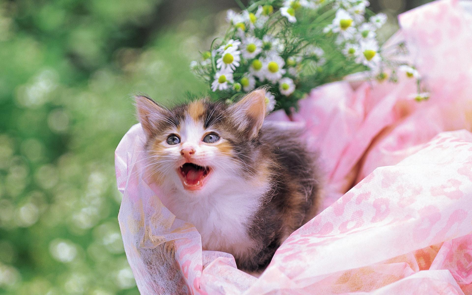 Little kitten in wooden box  Lovely Kittens Photo 1920