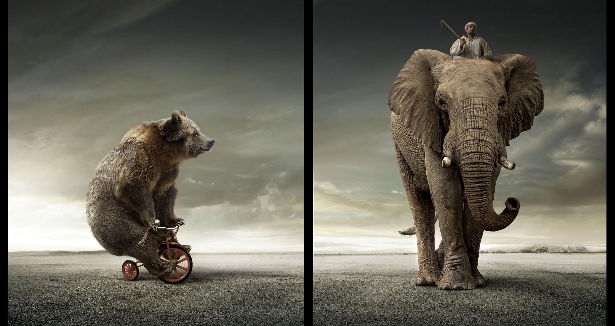 Смотреть сношение слонов 26 фотография