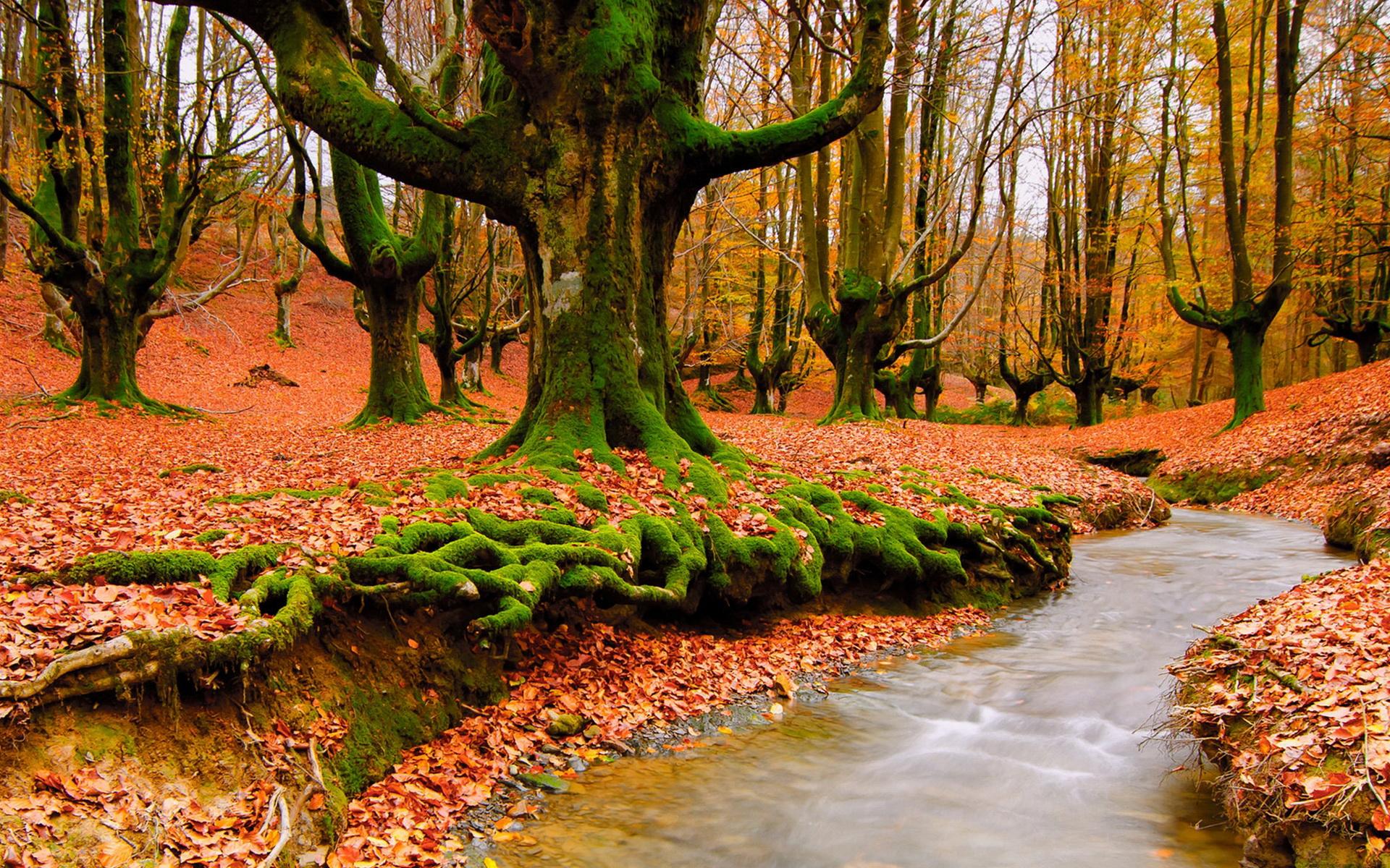 Осень листва лес  № 3162856  скачать